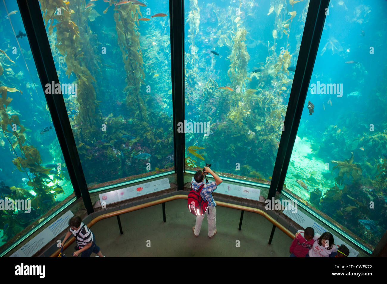 usa-california-ca-monterey-bay-aquarium-kelp-forest-exhibit-CWFK72.jpg