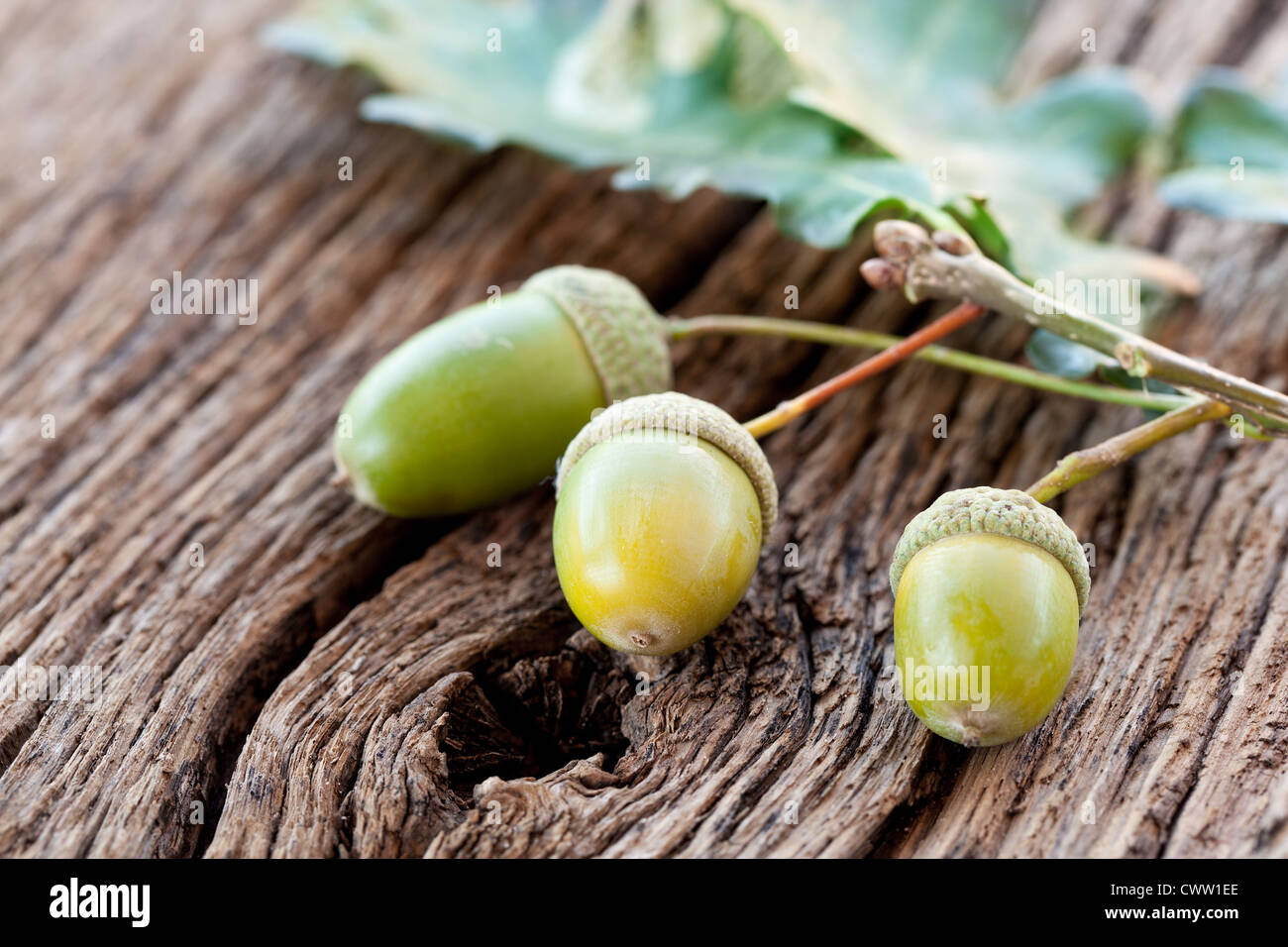 Acorn with leaves on a old wooden table - Stock Image