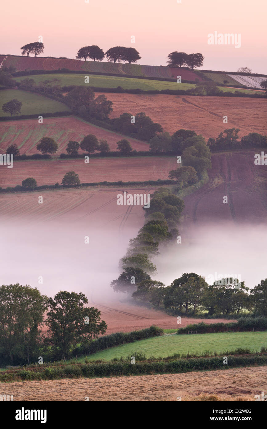 Mist covered rolling farmland, Stockleigh Pomeroy, Devon, England. Autumn (September) 2012. - Stock Image