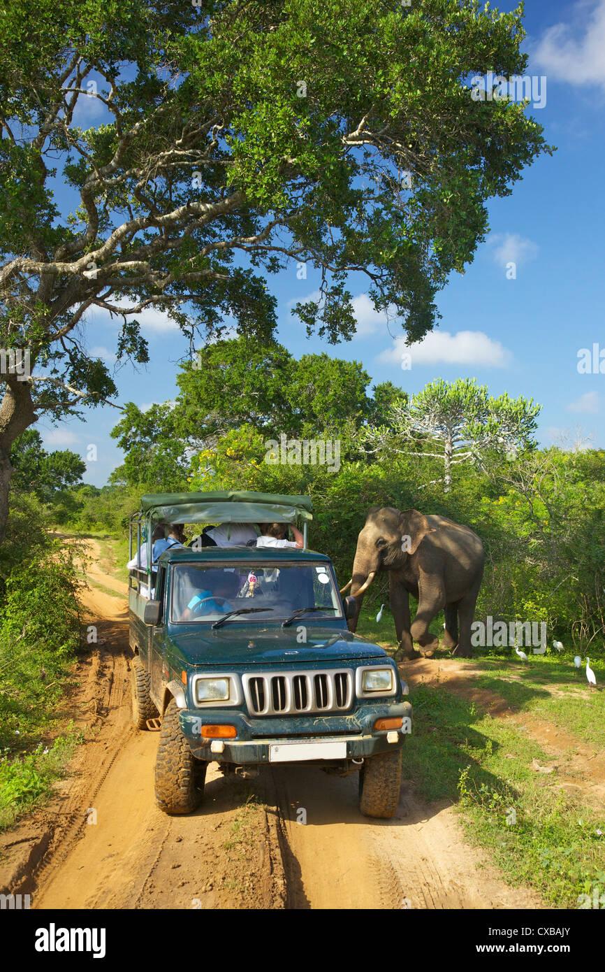 Asiatic tusker elephant (Elephas maximus maximus), close to tourists in jeep, Yala National Park, Sri Lanka, Asia - Stock Image