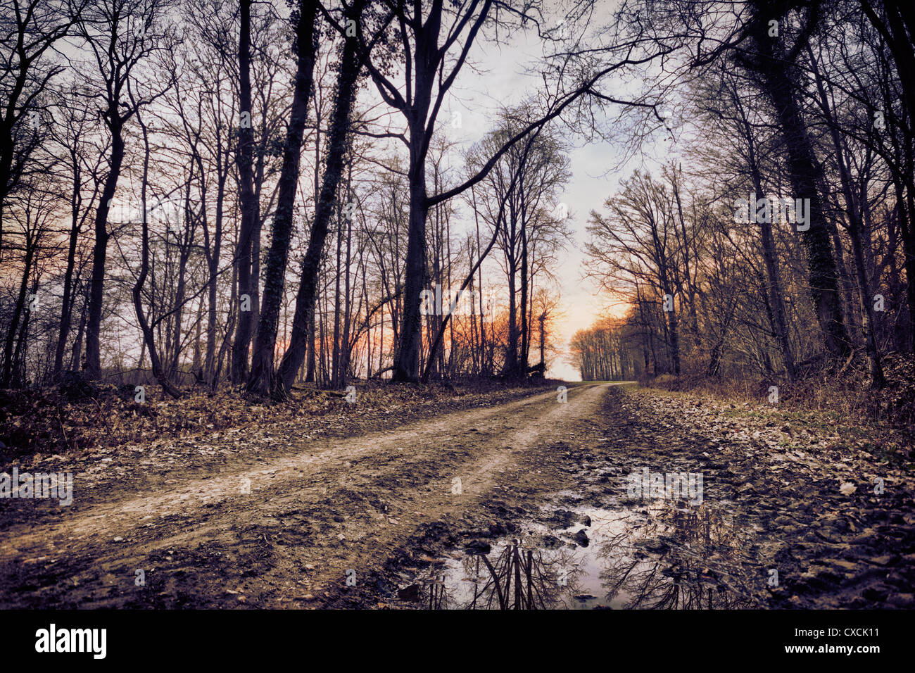 County road in france - Stock Image