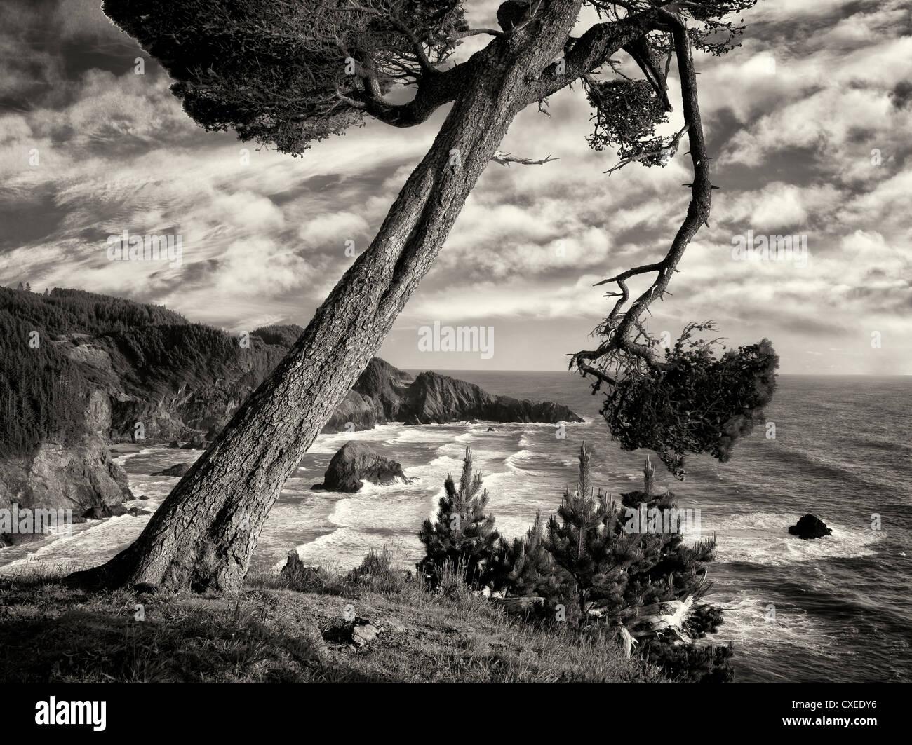 Overhanging tree and surf at Samuel H. Boardman State Scenic Corridor. Oregon - Stock Image