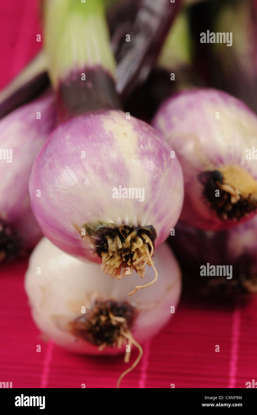 Red spring onion - Stock Image