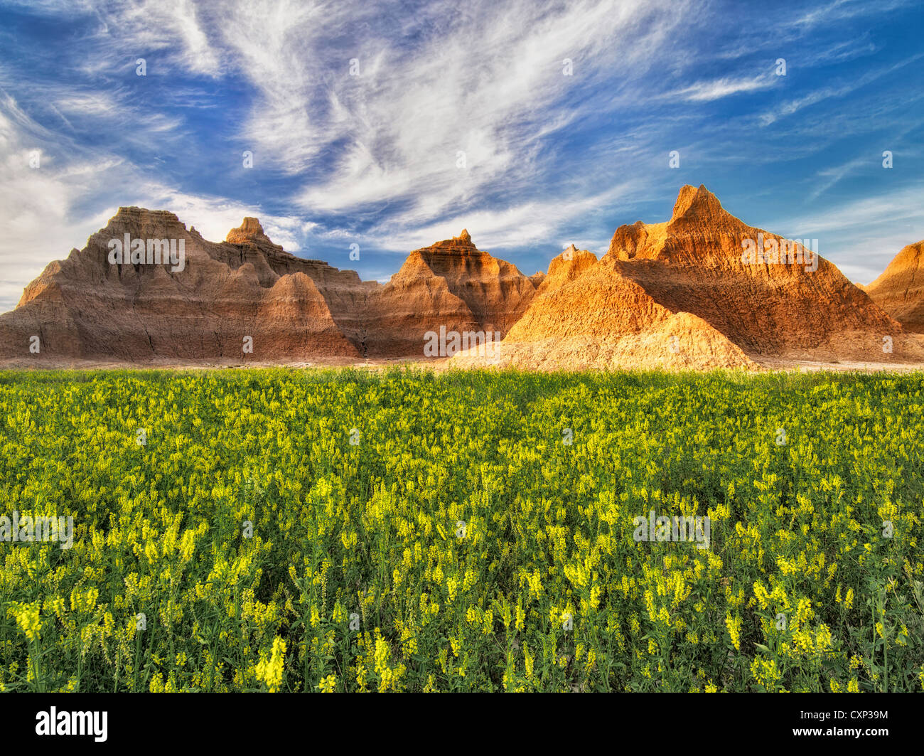 Yellow Sweet Clover and rock formations. Badlands National Park, South Dakota. - Stock Image