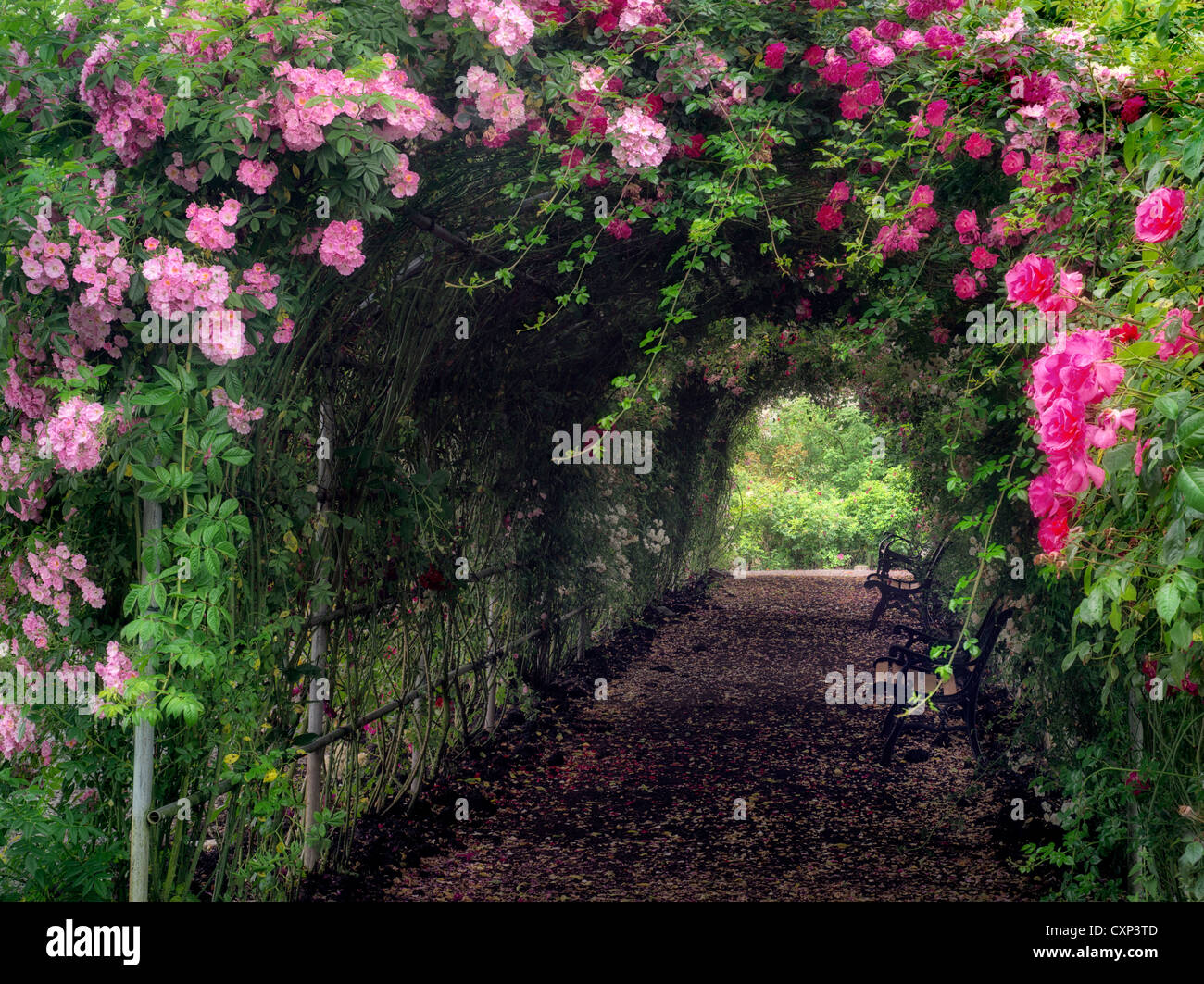 Rose Arbor Stock Photos & Rose Arbor Stock Images - Alamy
