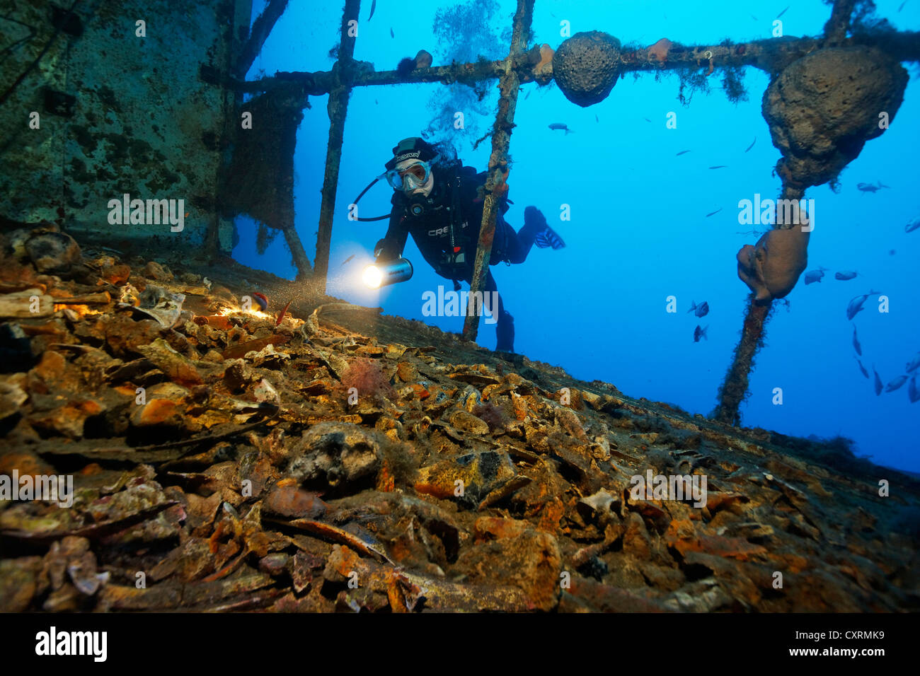 Scuba diver looking at horse bones in the cargo space, wreck of the Zenobia, Cyprus, Asia, Europe, Mediterranean - Stock Image