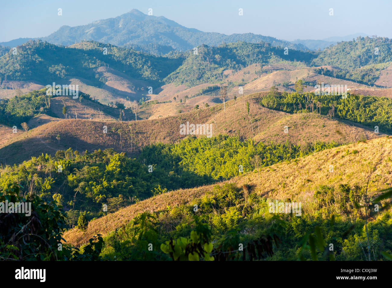 Landscape, harvested maize fields, bamboo forest, Northern Thailand, Thailand, Asia - Stock Image