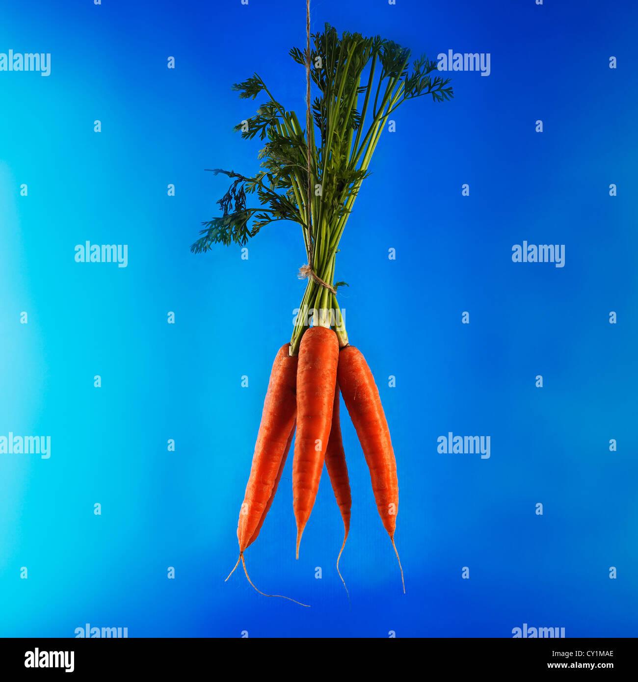 bunch-of-fresh-organic-carrots-hanging-o