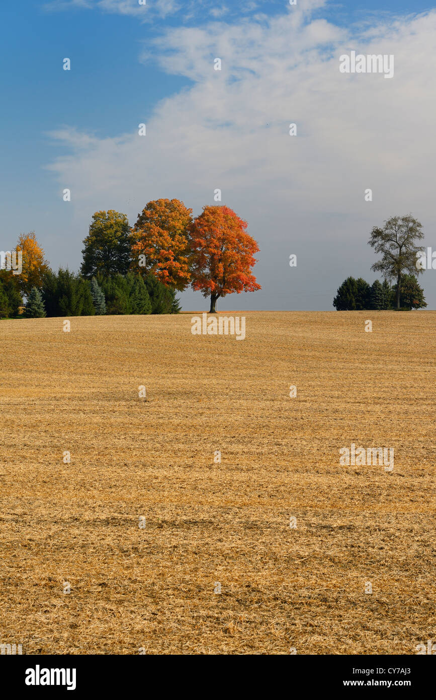 Trees on the crest of a hill of harvested cropland in the Fall  Caledon Ontario Canada - Stock Image
