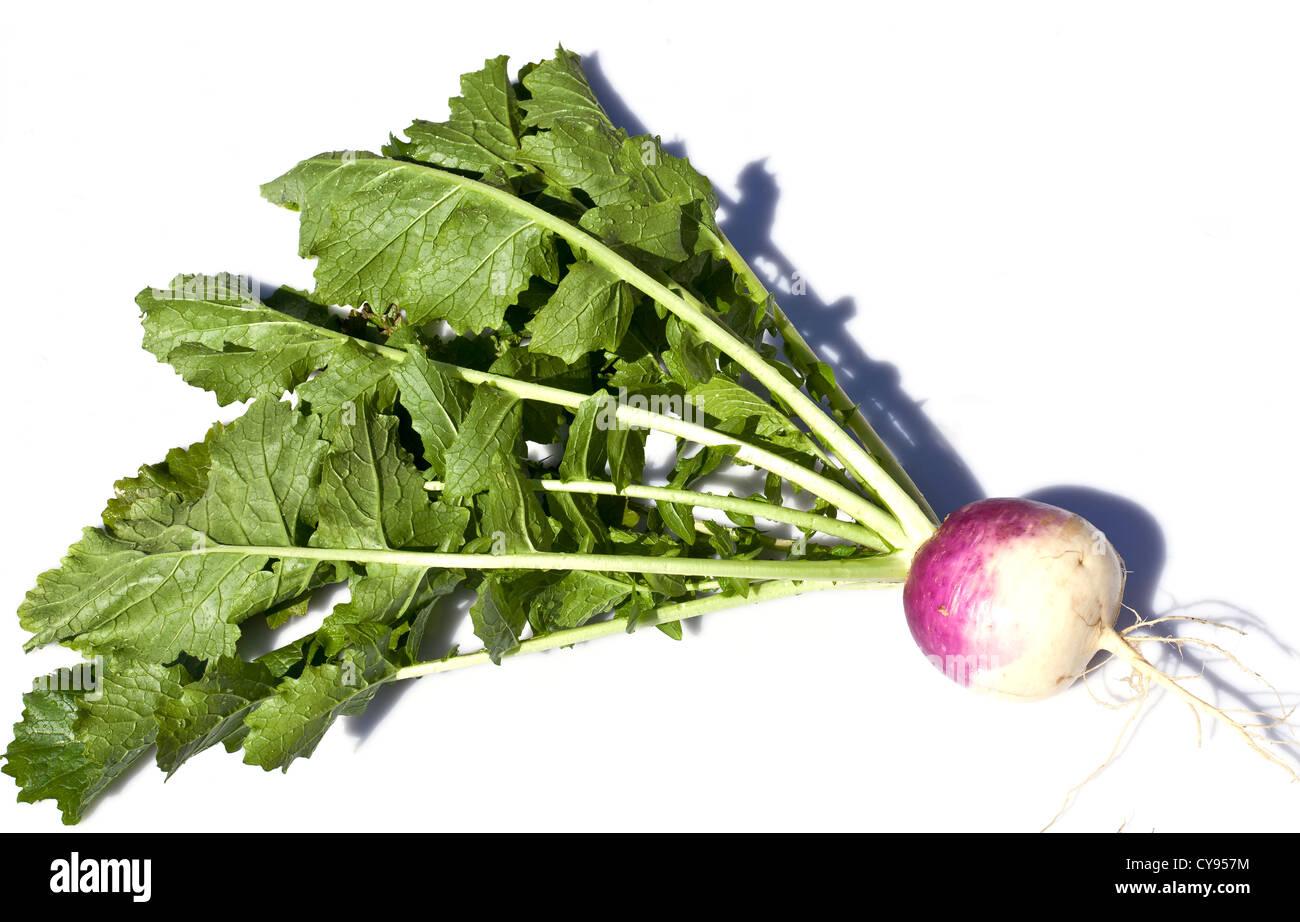 Turnip Purple Top Milan - Stock Image