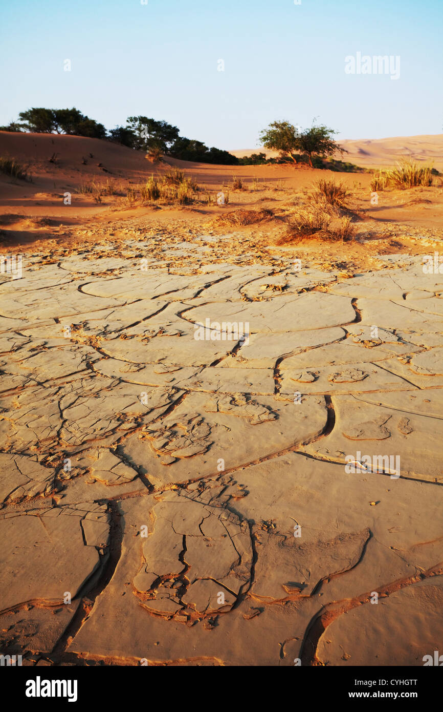 Drought land - Stock Image