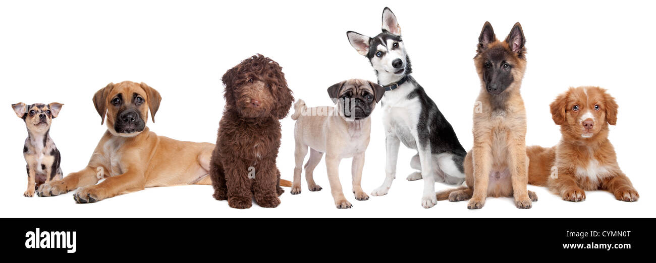 Large Group Of Puppies Stock Photo 51471976 Alamy