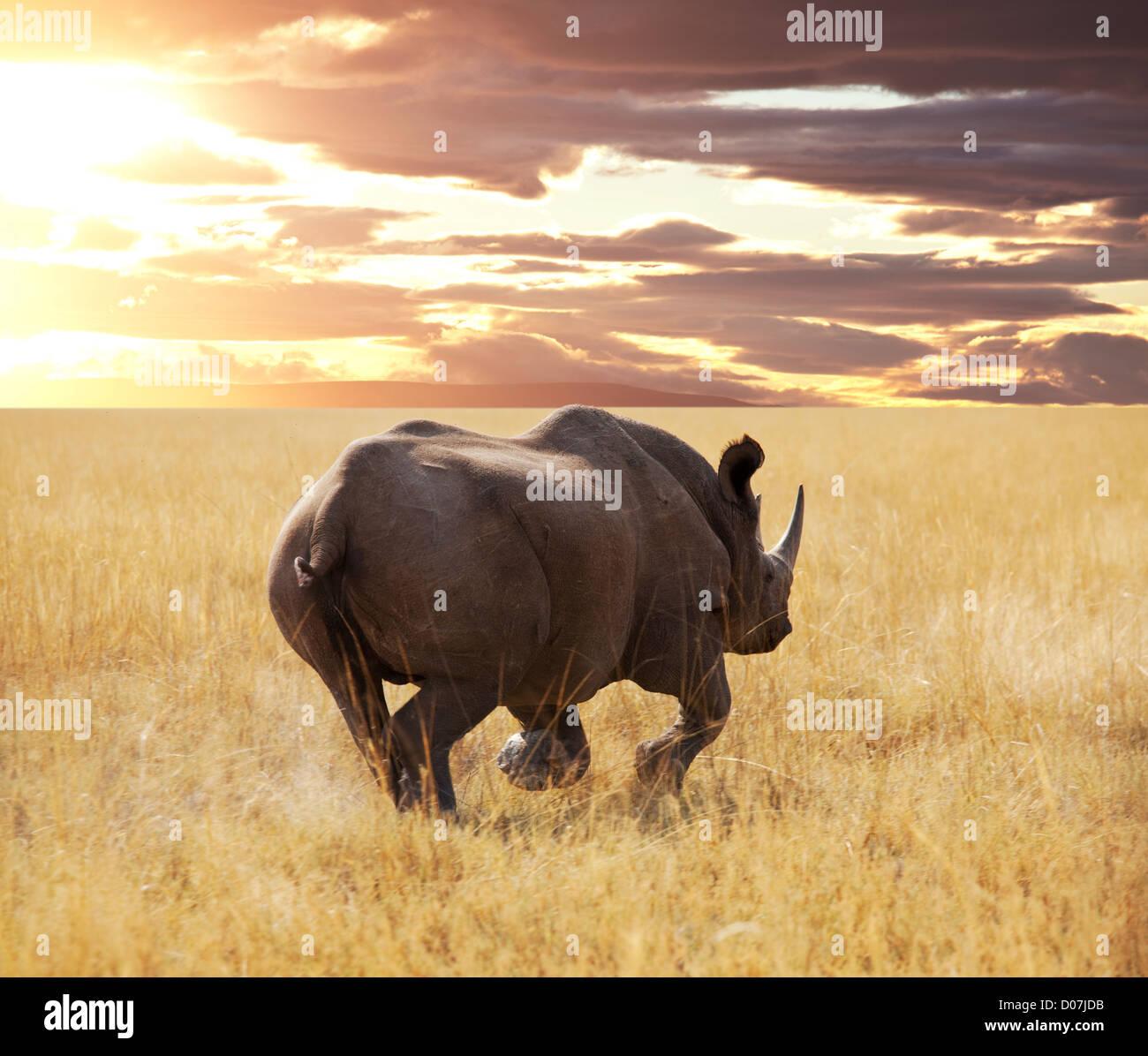 rhino and antelope Gny in Etosha Park - Stock Image