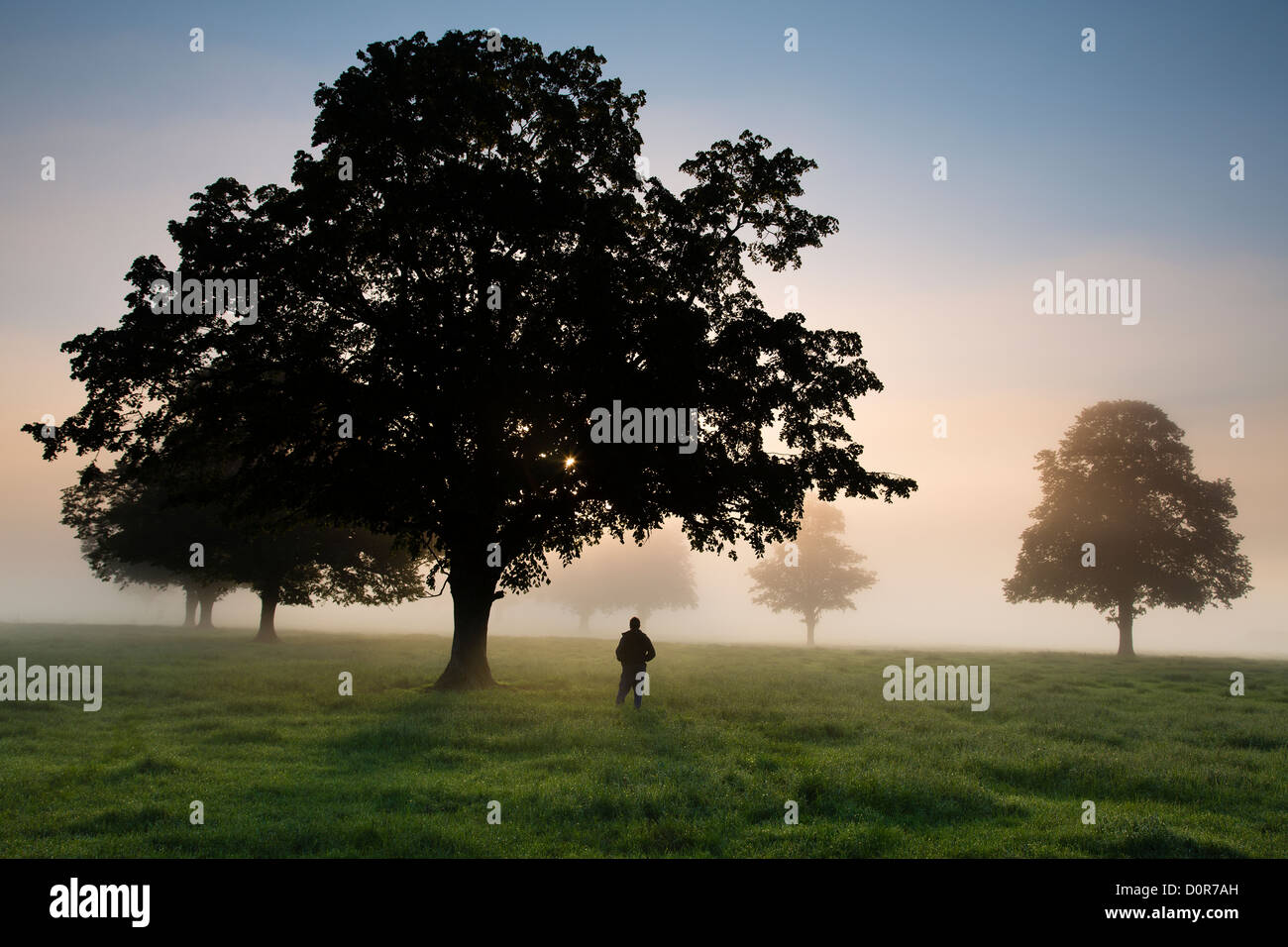 A photographer in a field on a misty morning near Milborne Port, Somerset, England, UK - Stock Image