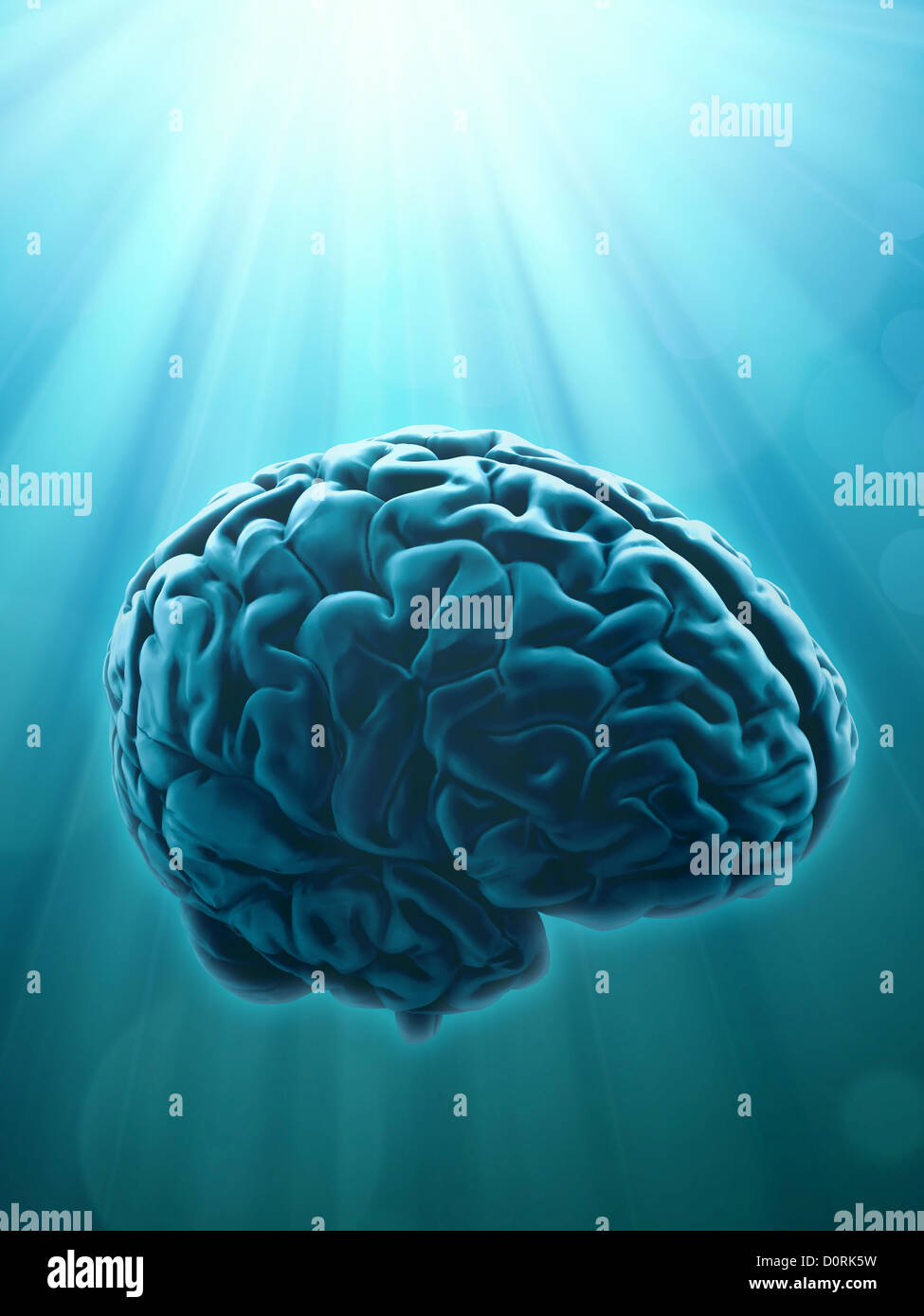 Knowledge and creativity concept - Stock Image