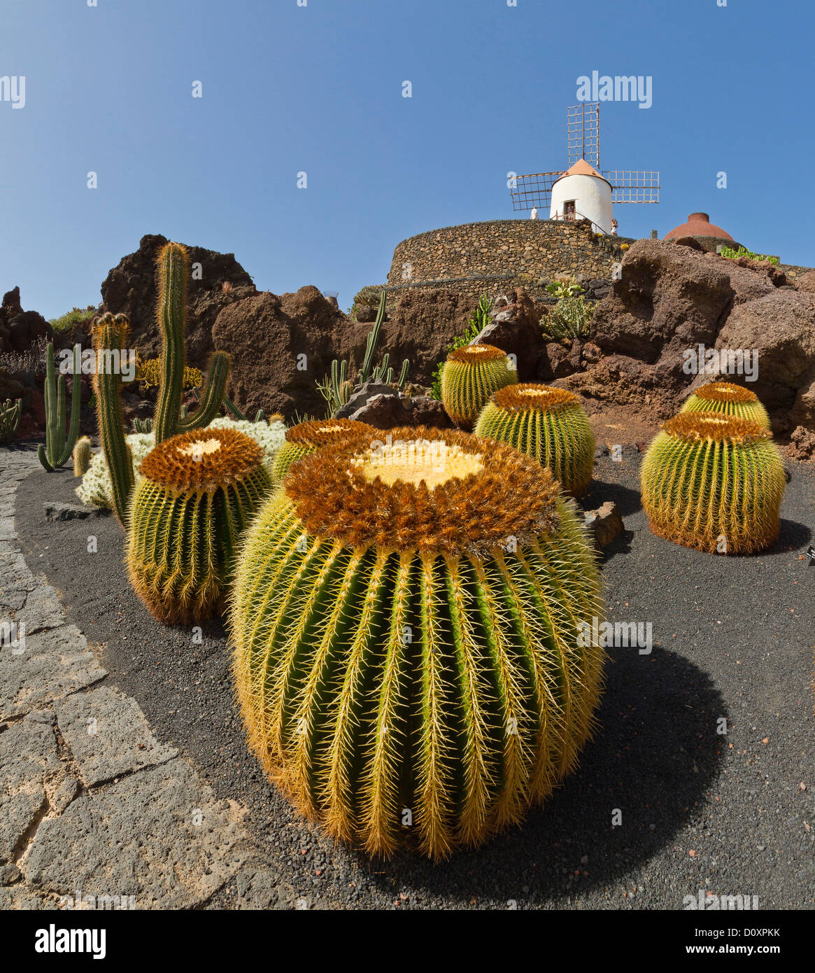 Spain, Lanzarote, Guatiza, Jardin de Cactus, cactus, garden, windmill, summer, Canary Islands, - Stock Image