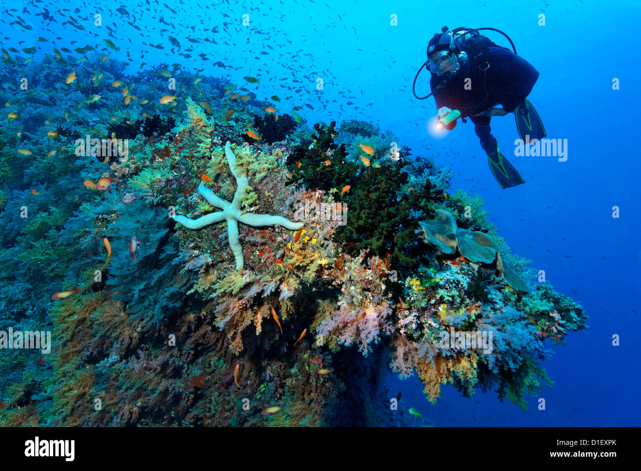 Diver at reef landscape with seastar, Baa Atoll, Maldives, underwater shot - Stock Image