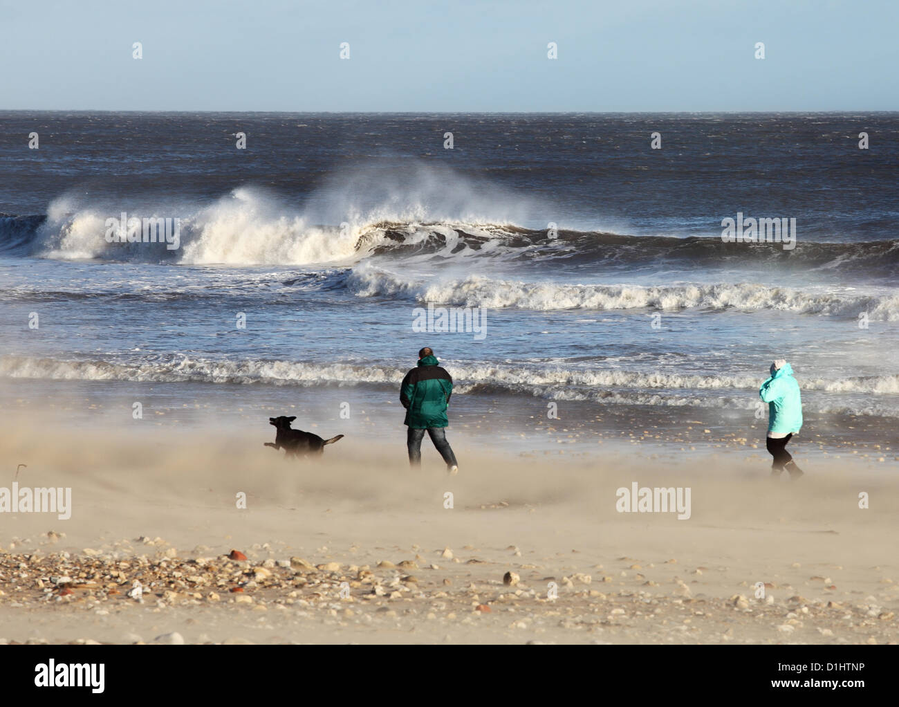 dog-walkers-struggle-against-strong-wind
