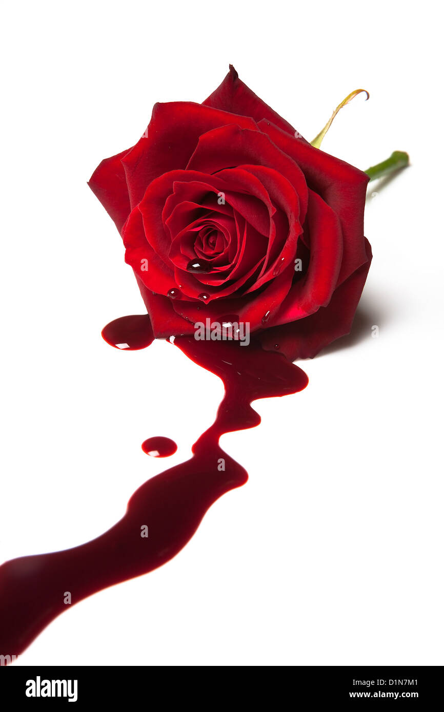 Red rose with blood flowing out of its heart - Stock Image
