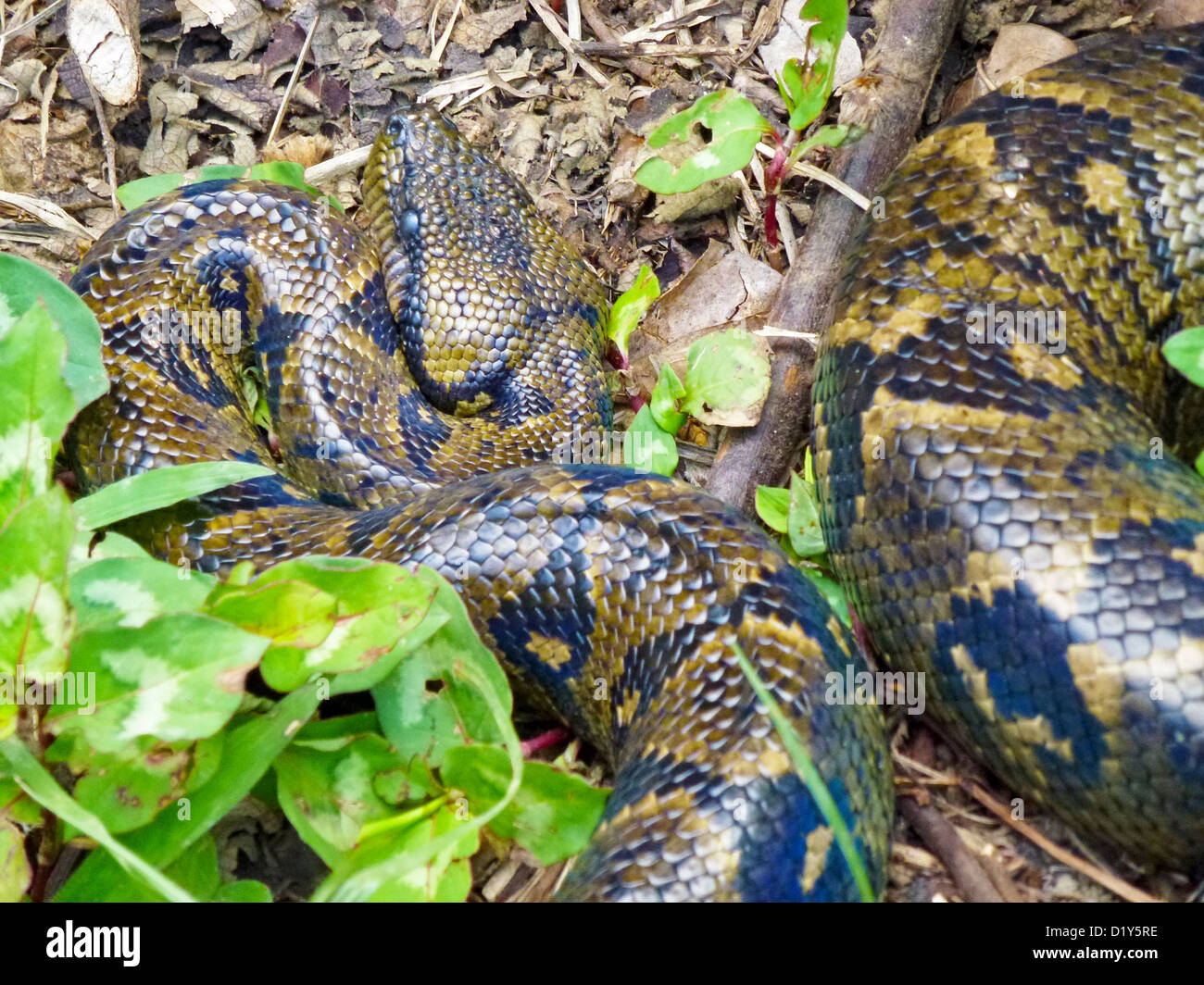 Boas Stock Photos & Boas Stock Images - Alamy