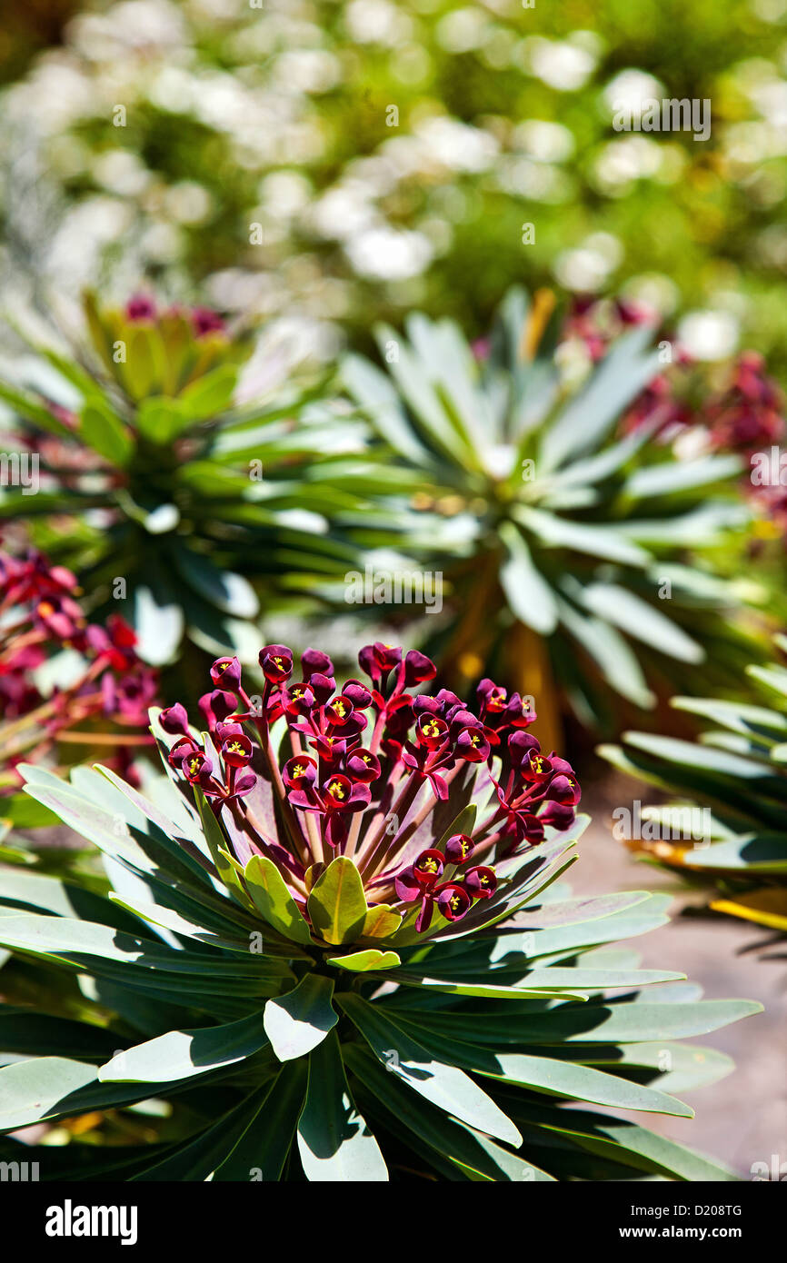 Plants in the Jardin Canario, Tafira, Gran Canaria, Canary Islands, Spain - Stock Image