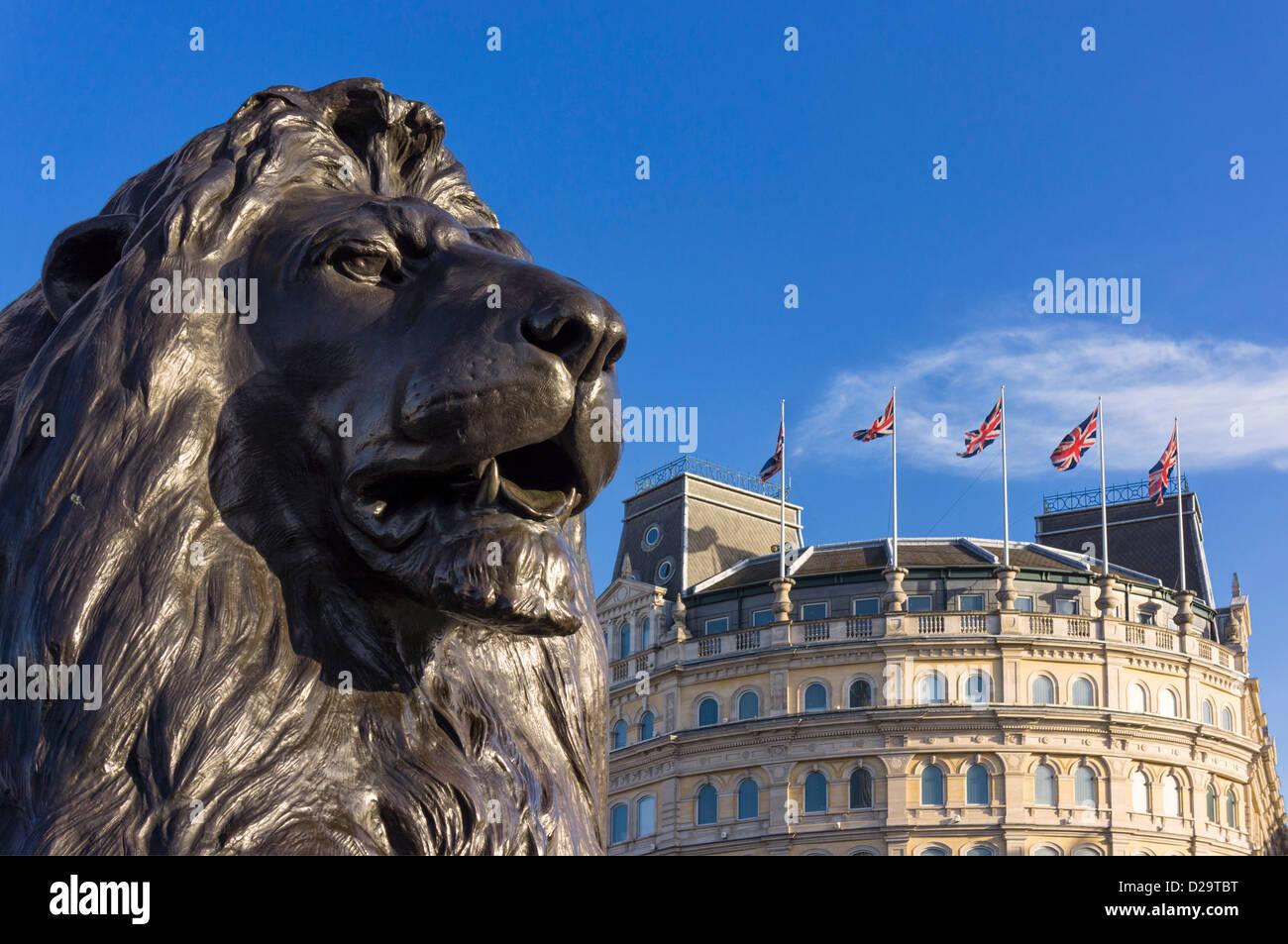 Lion in Trafalgar Square, London, England, UK - with Union Jack flags behind - Stock Image