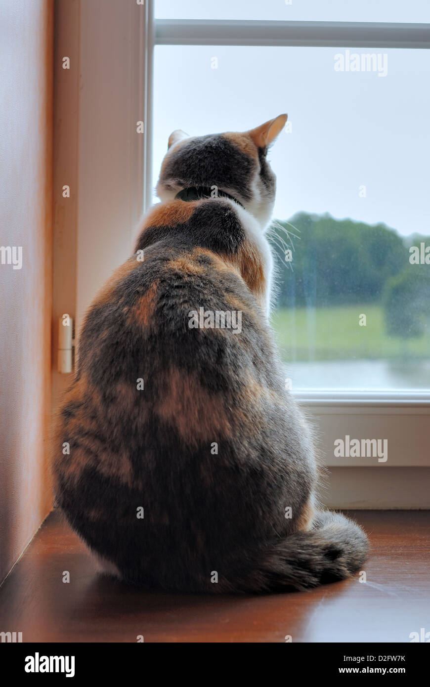 Cat looking out of a window - Stock Image