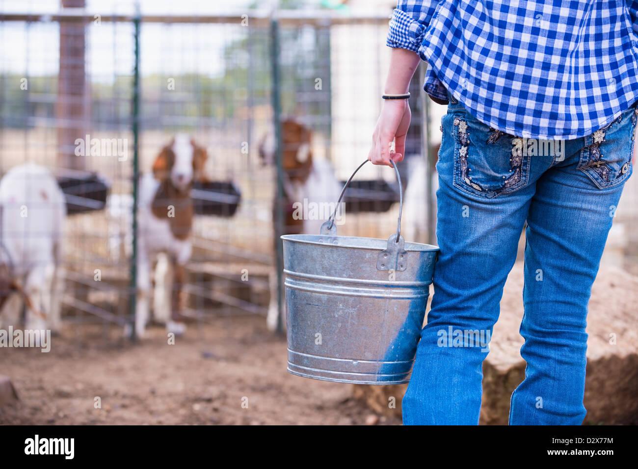 Female teenager feeding goats from a metal bucket on livestock farm - Stock Image