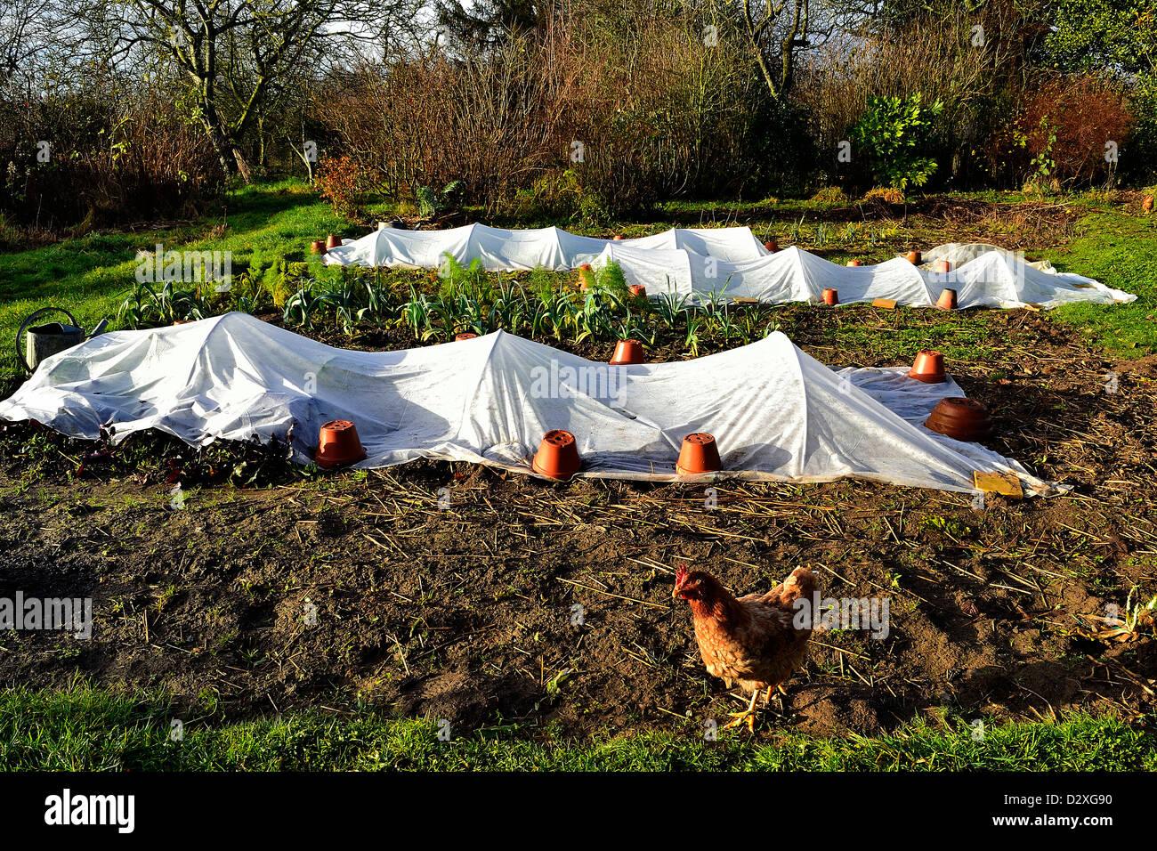 Vegetable garden in winter (december), mixed beds of vegetables ...
