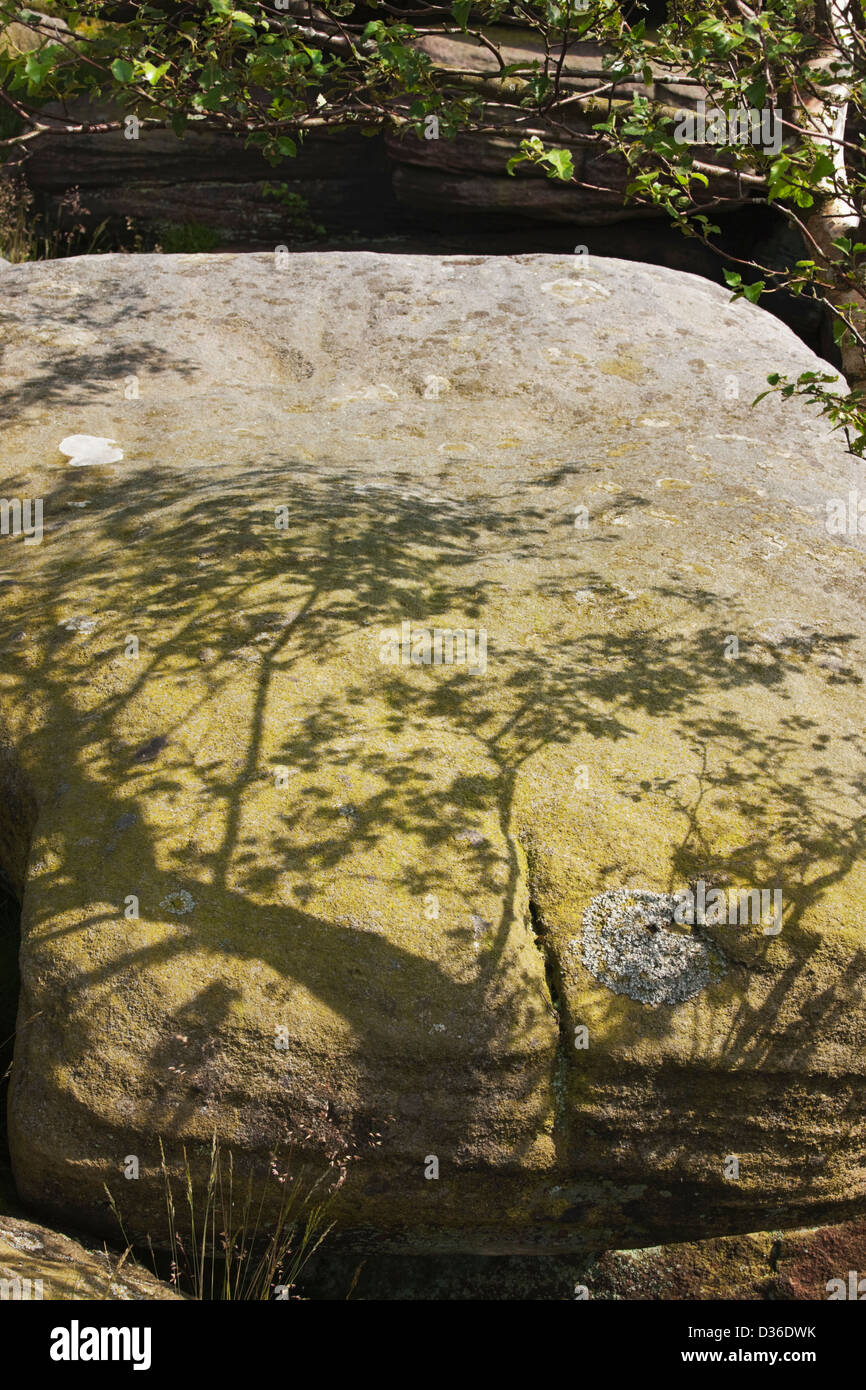 Shadow of tree on rock, Froggatt Edge, Peak District, Derbyshire, England - Stock Image