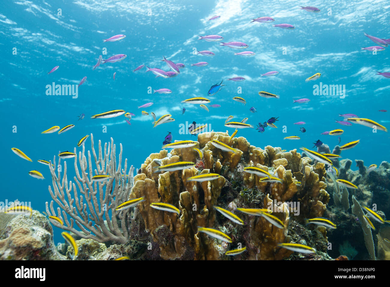 Colorful fish at tropical coral reef - Stock Image