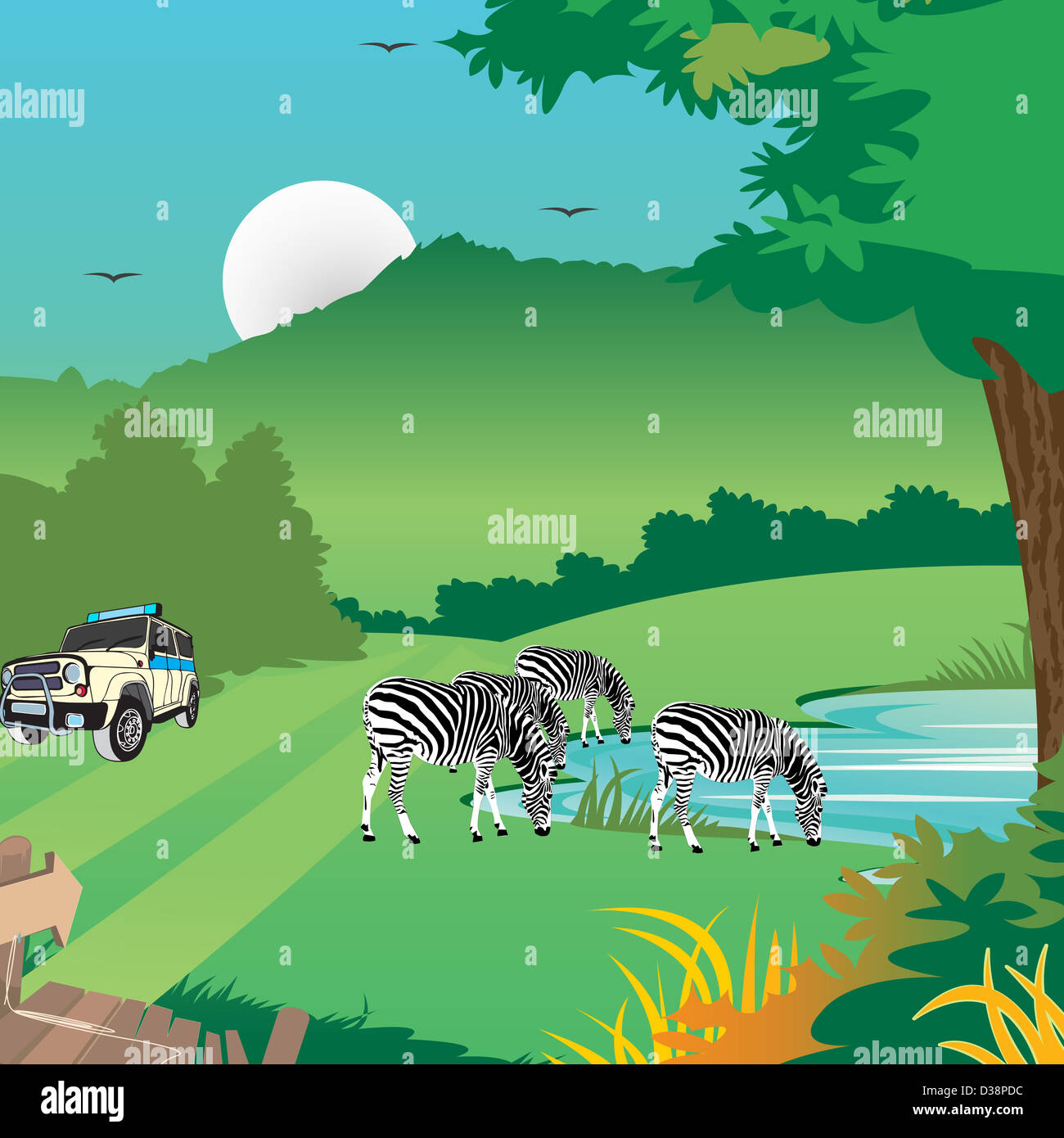 Zebras with a jeep in a forest - Stock Image
