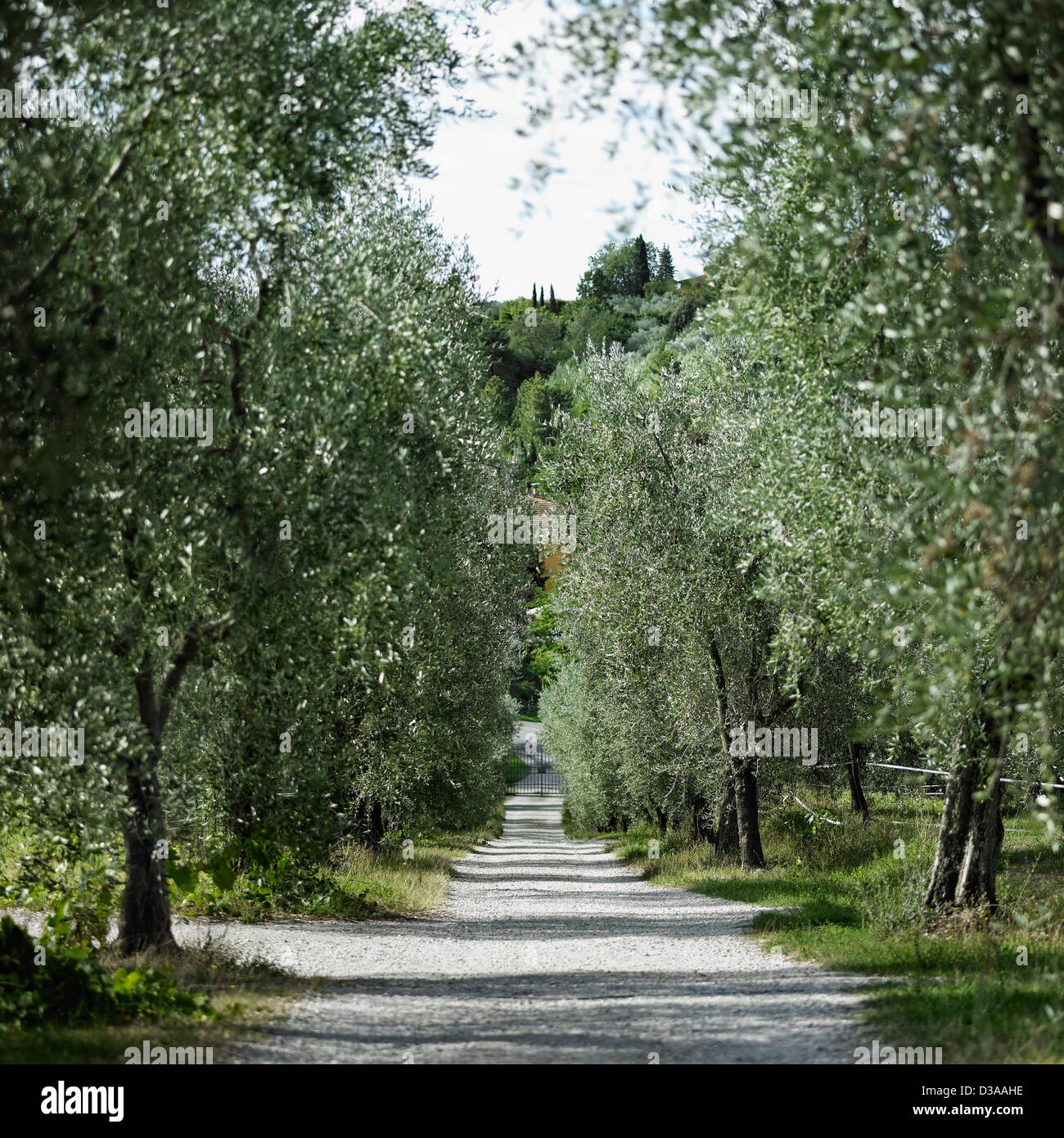 Tree-lined dirt road in rural landscape - Stock Image