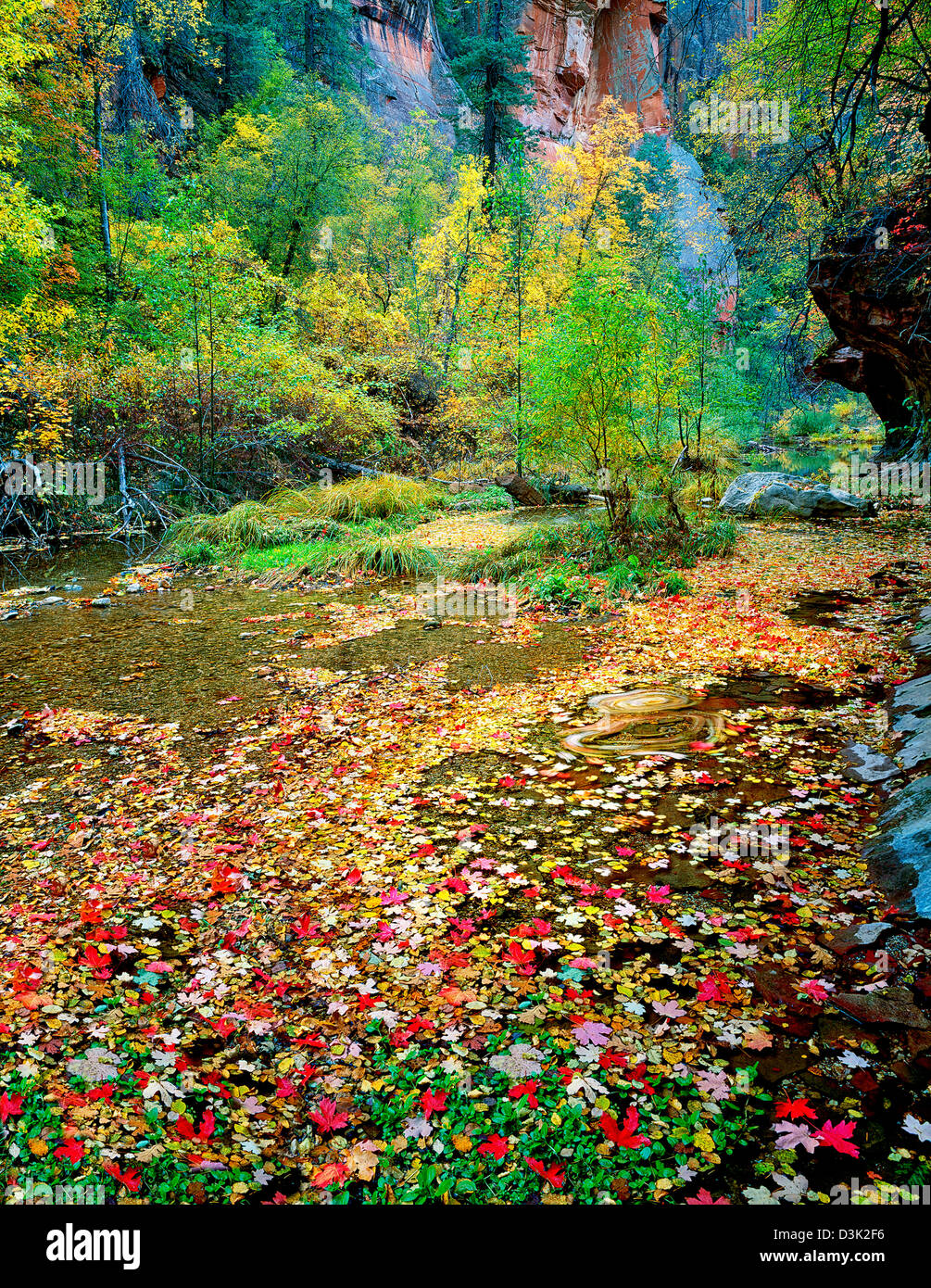 Fall color and West Fork Oak Creek. Red Rock Secret Mountain Stock ...