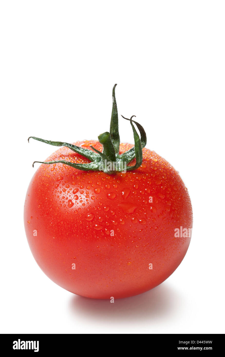 Tomato with dew on a white background, cut out - Stock Image
