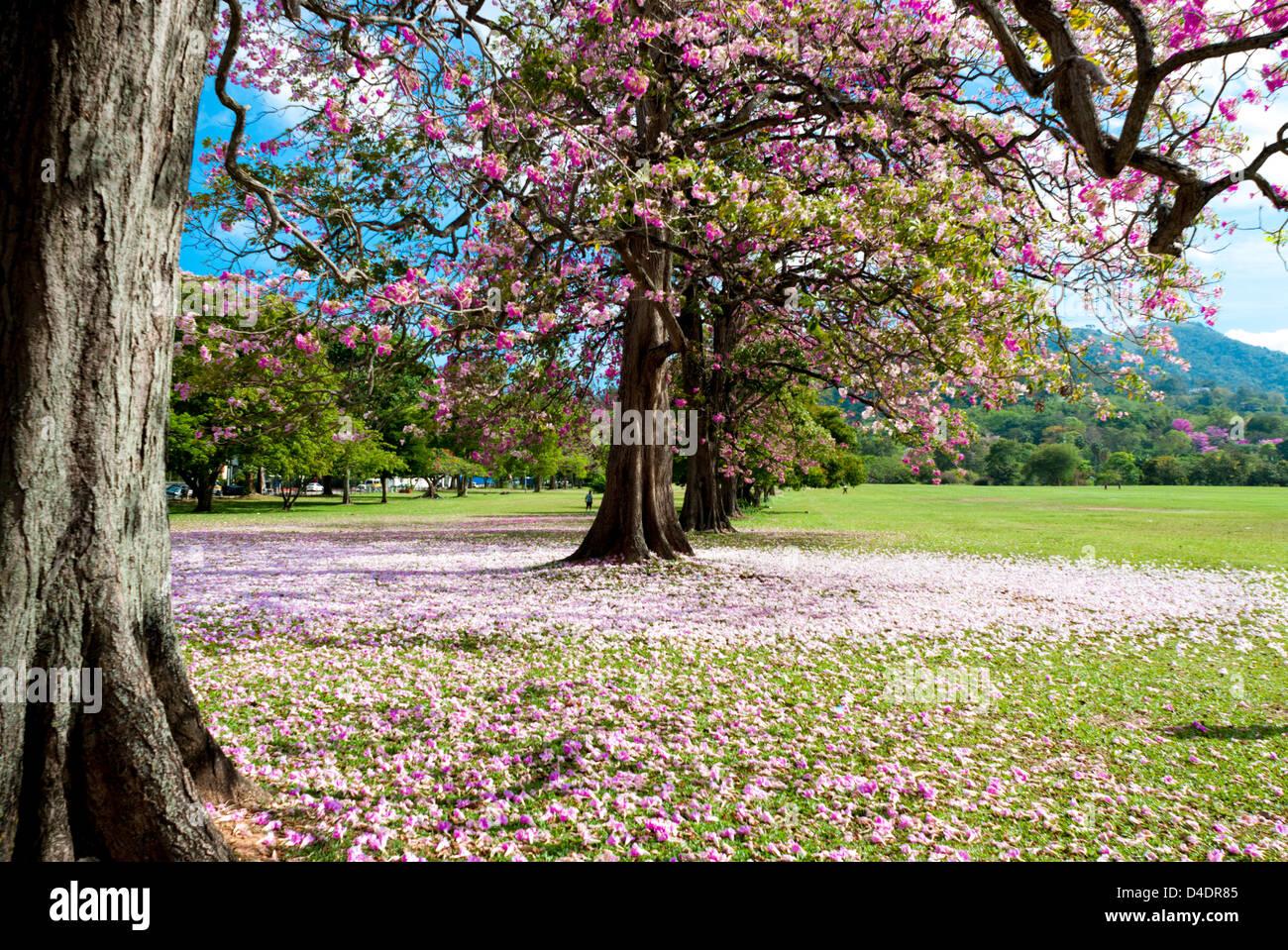 Queens Park Savannah Stock Photos & Queens Park Savannah ...