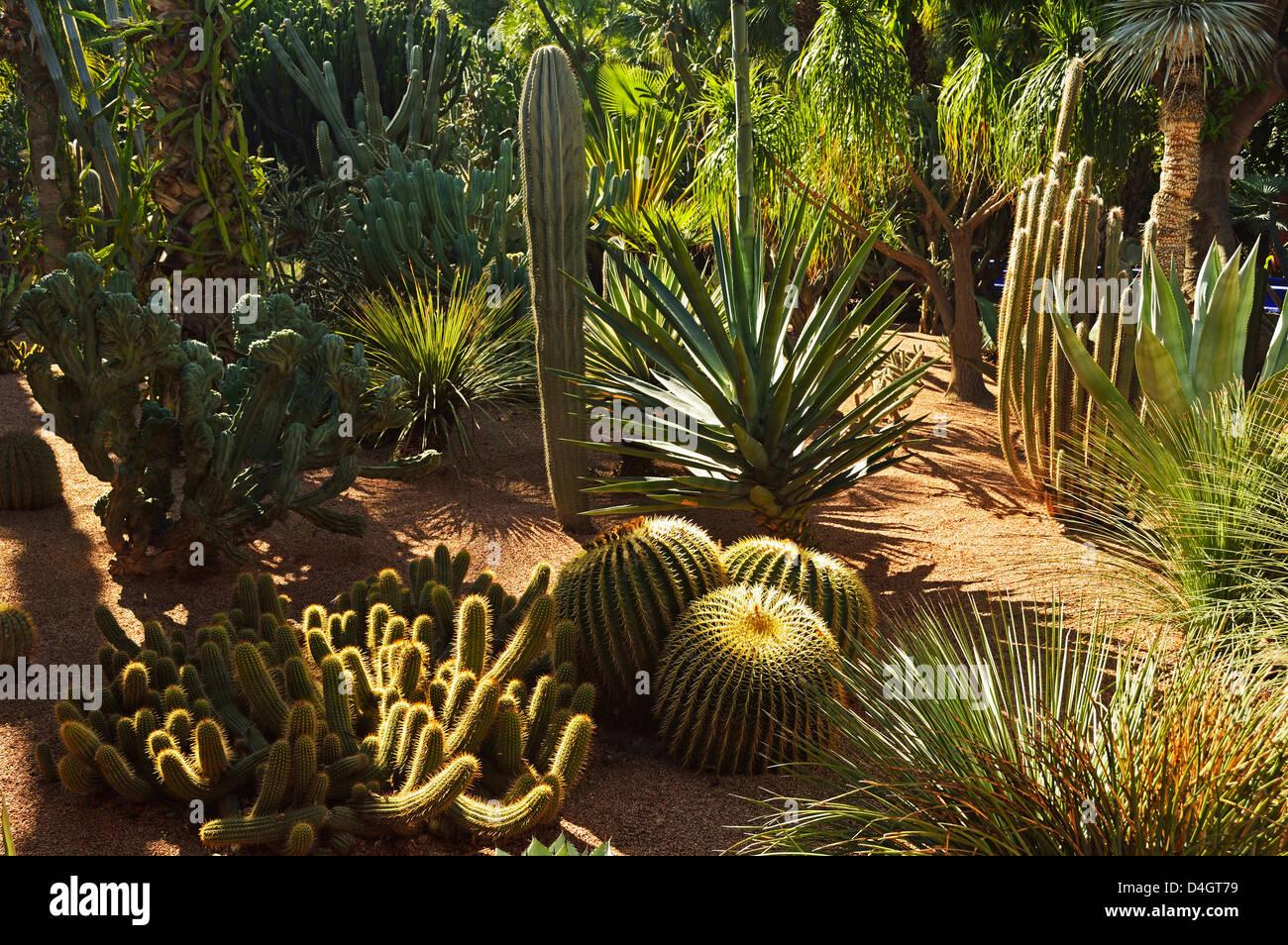 The Majorelle Gardens, Marrakesh, Morocco, North Africa Stock Photo ...