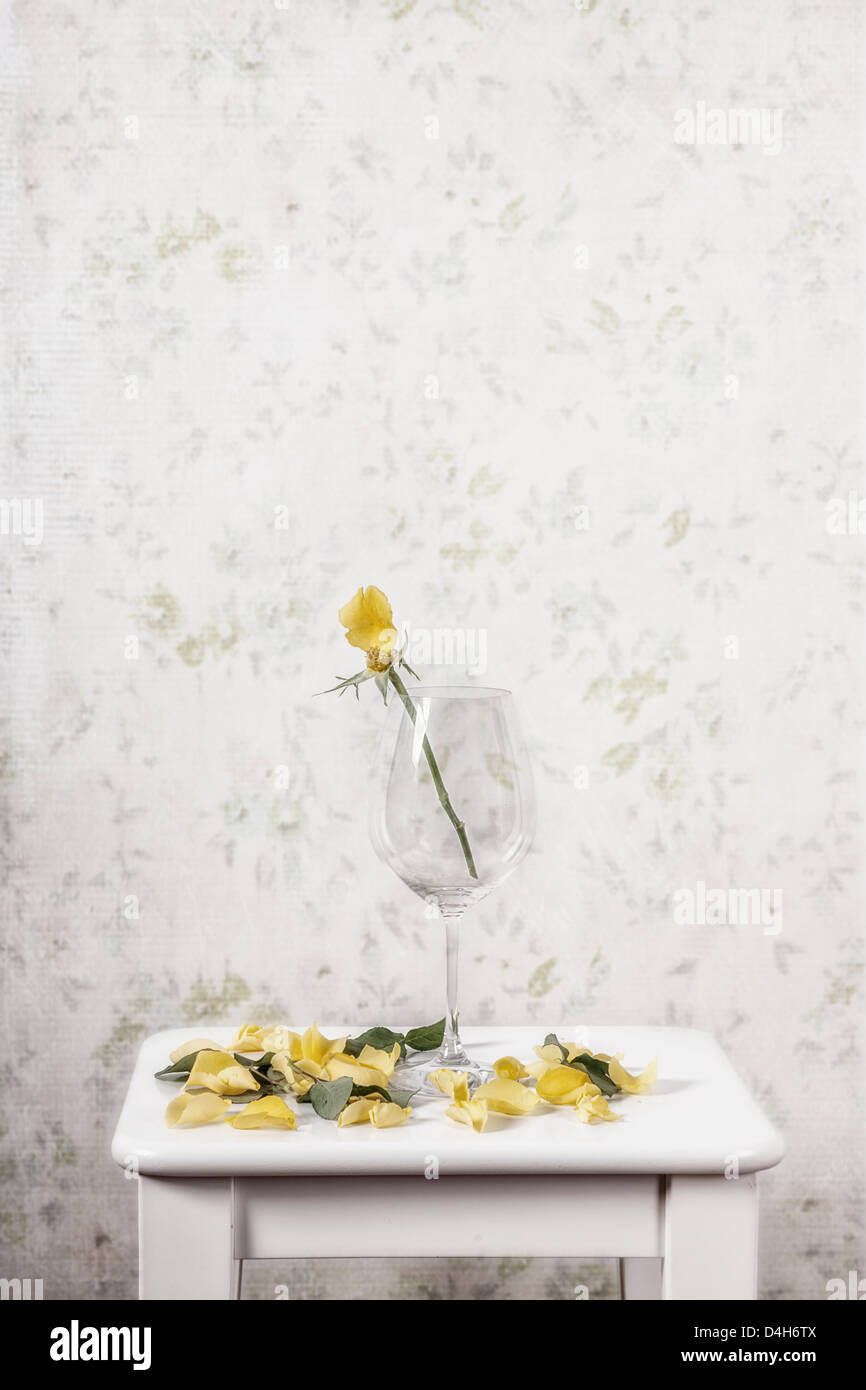 a yellow rose in a glass lost its petals - Stock Image