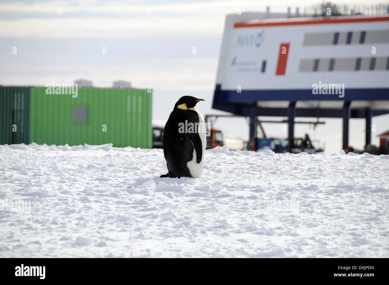 A penguin visits the new German research station Neumayer III, Antarctica, 23 February 2009. The night before, another Stock Photo