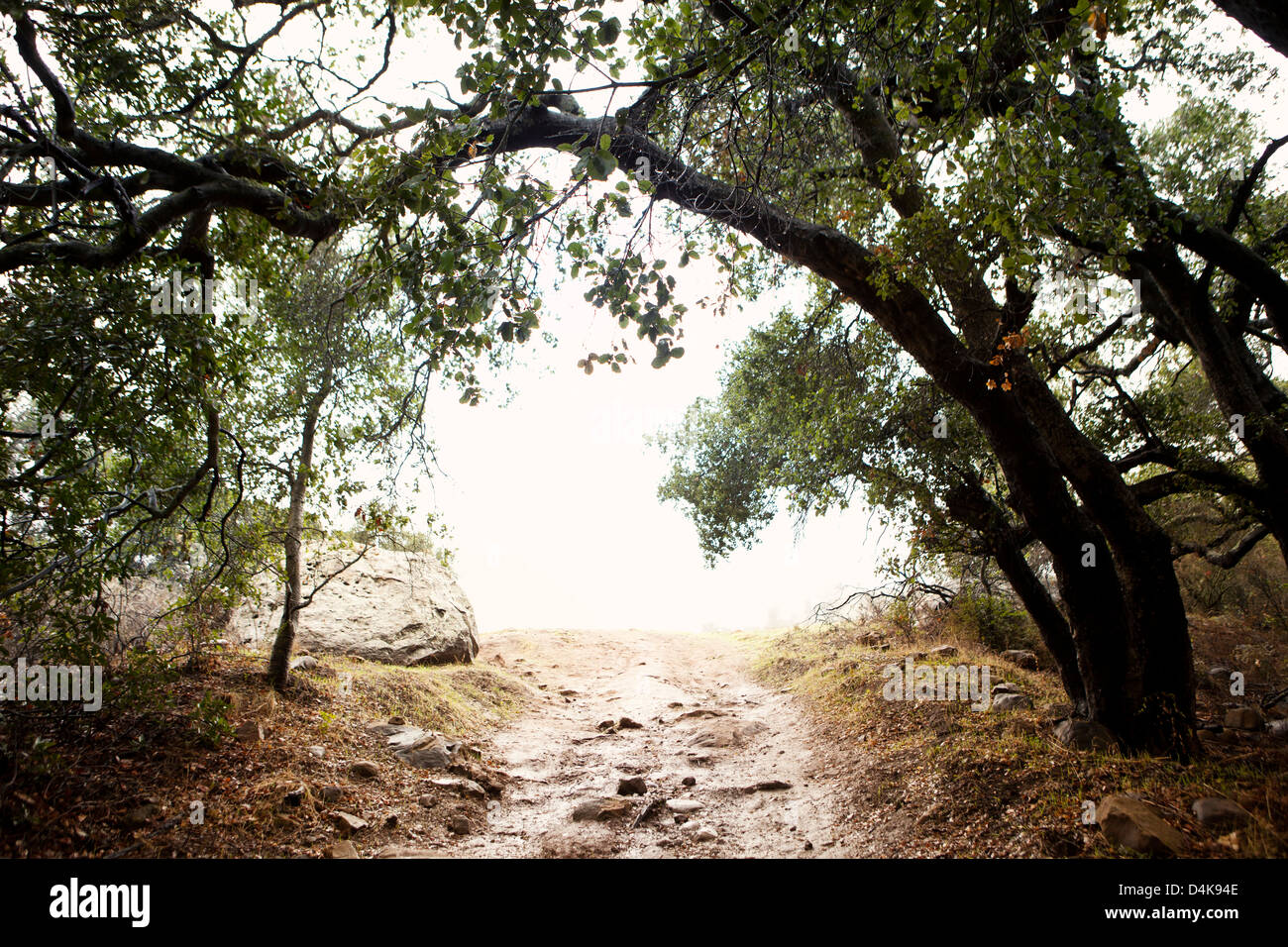 Dirt road leading out of forest - Stock Image
