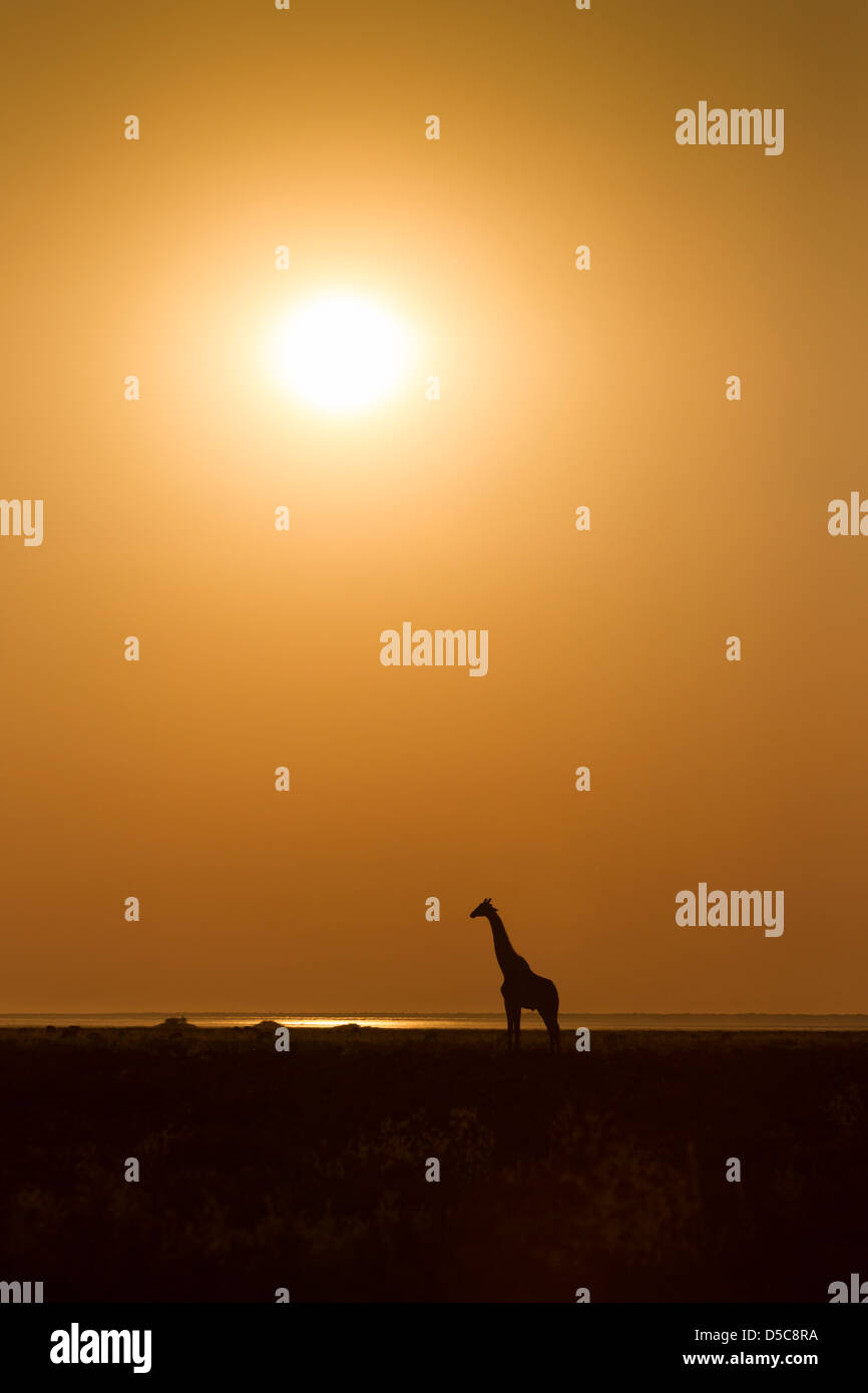 Silhouette of a giraffe in profile against orange sky and afternoon sun on the plains of Etosha National Park, Namibia. - Stock Image