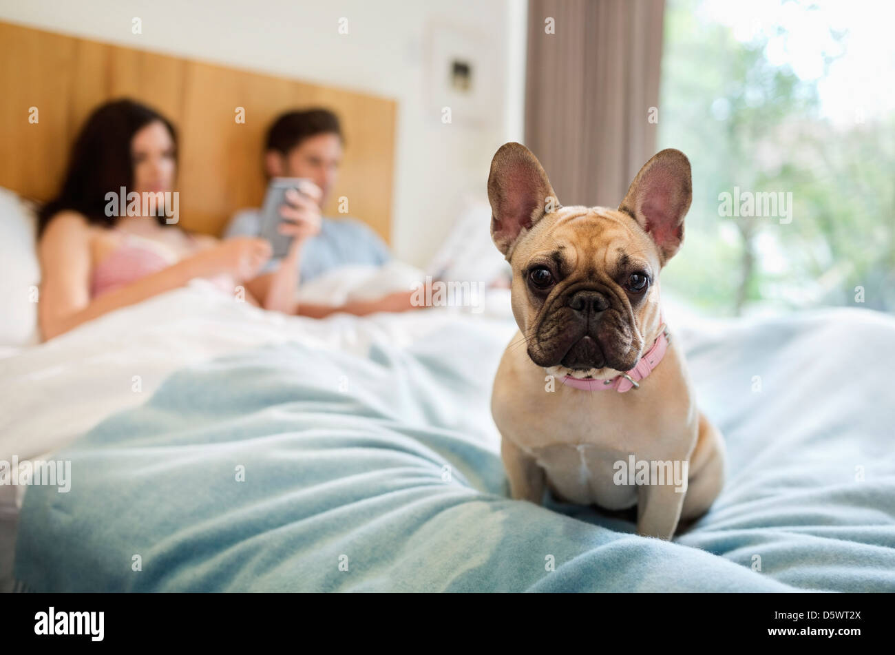 Dog sitting with couple in bed Stock Photo