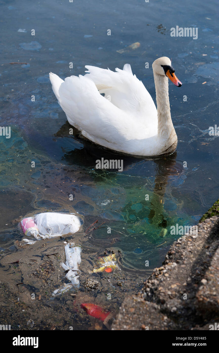 Swan on water polluted with plastic pollution waste and an oil slick - Stock Image