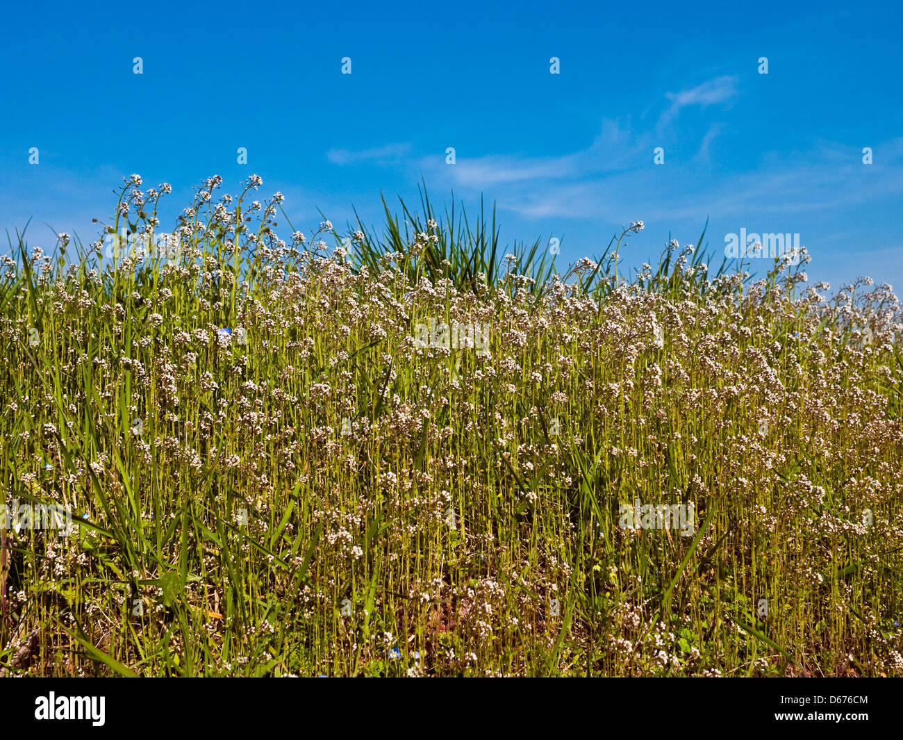 Roadside wild flowers (un-named) - France. - Stock Image