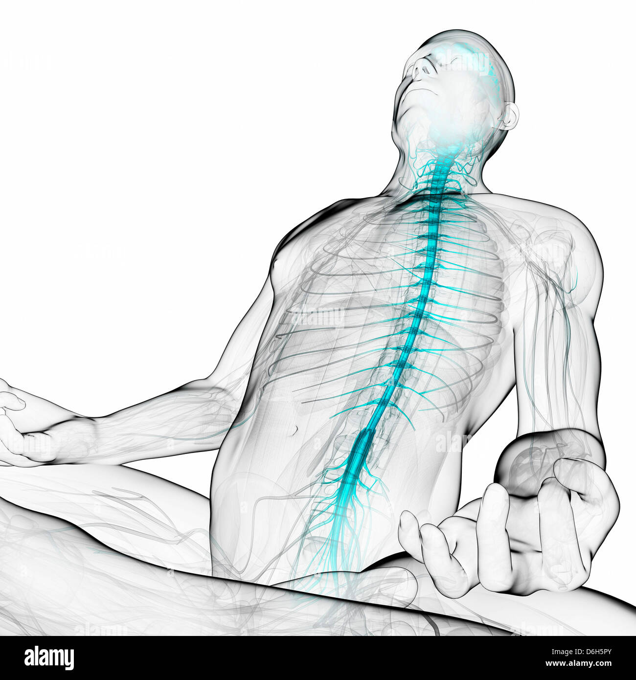 Healthy spinal cord, artwork - Stock Image