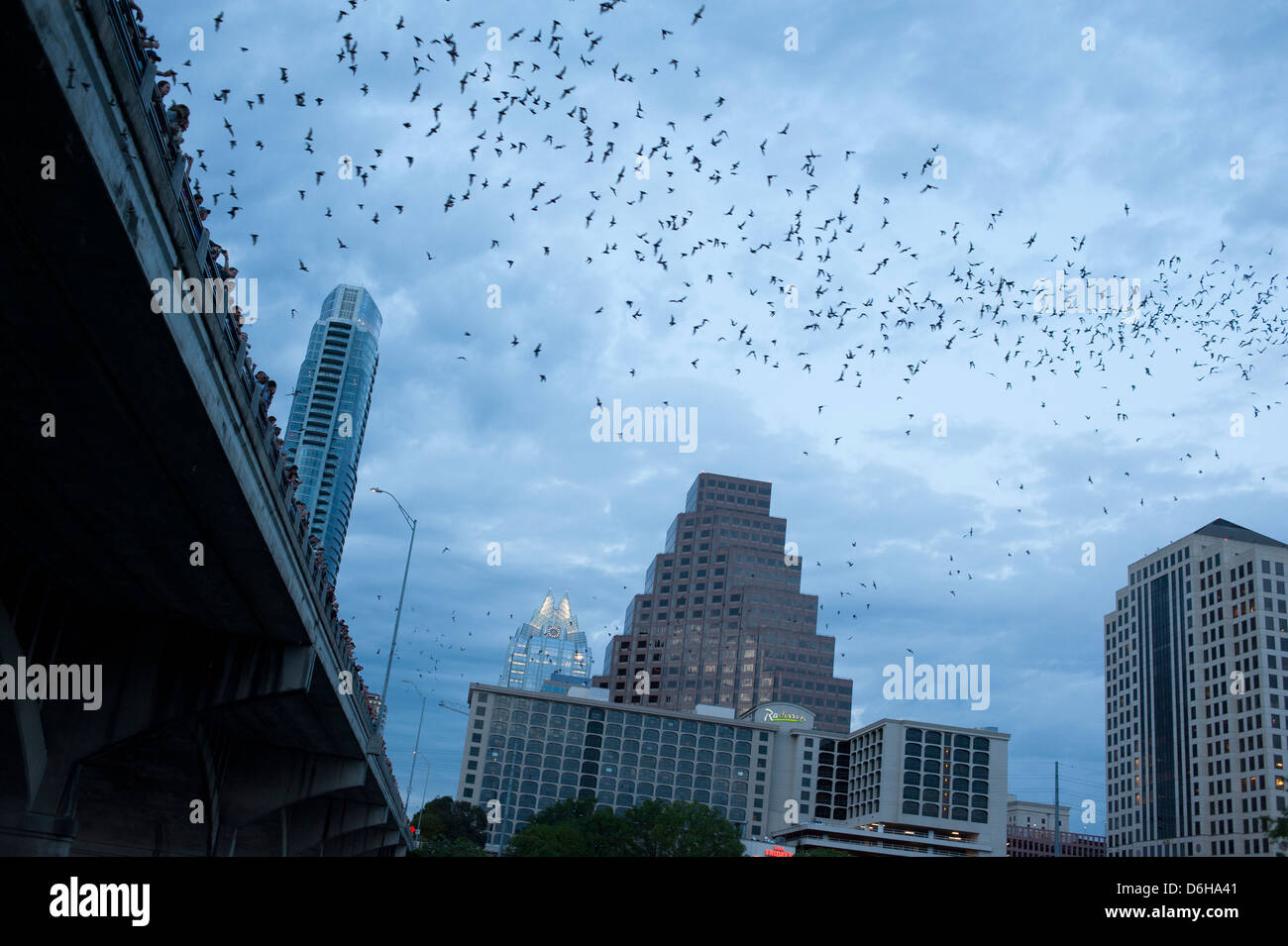 usa-texas-tx-austin-mexican-free-tailed-bats-emerge-from-their-roosts-D6HA41.jpg