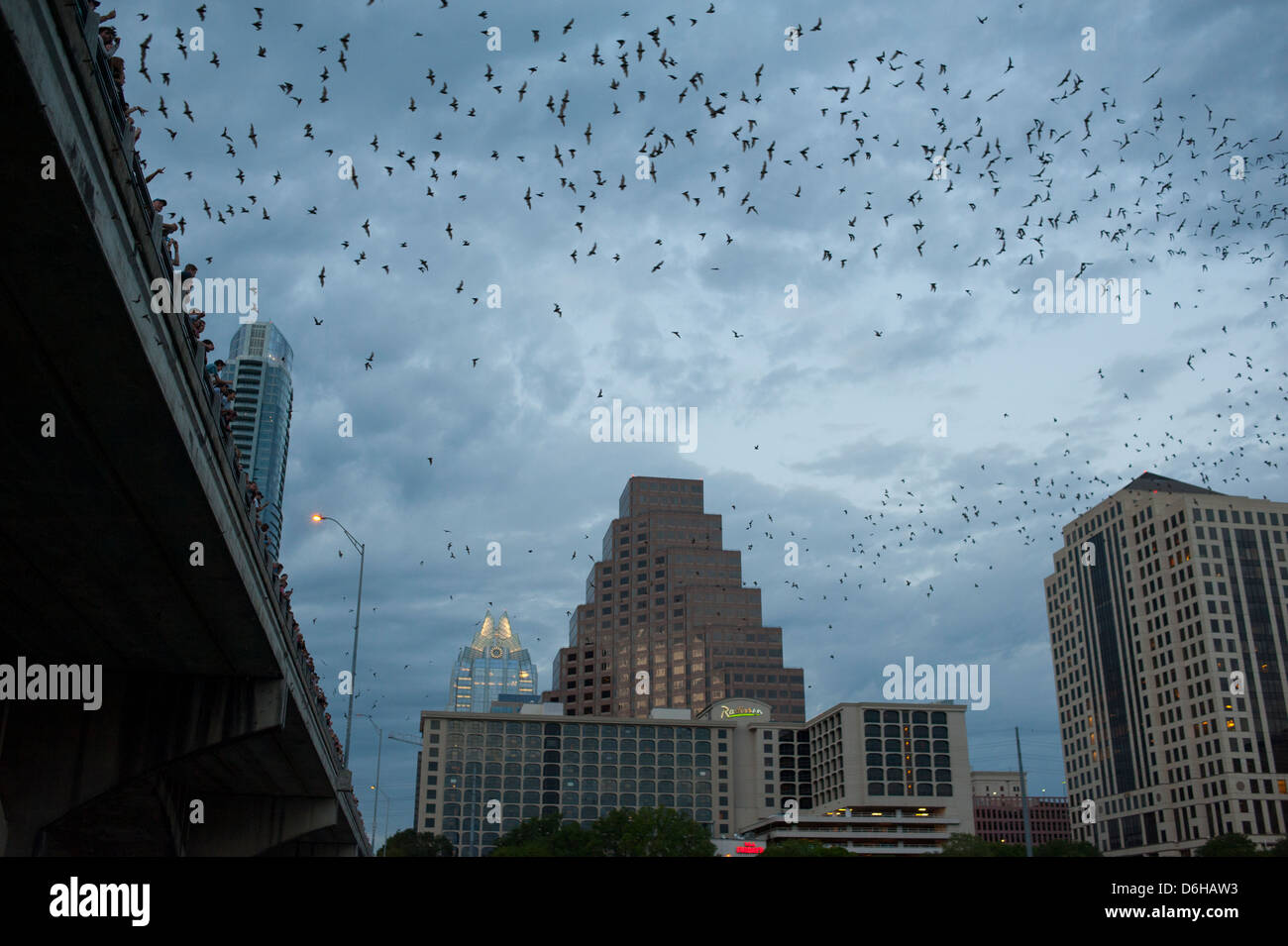 usa-texas-tx-austin-mexican-free-tailed-bats-emerge-from-their-roosts-D6HAW3.jpg