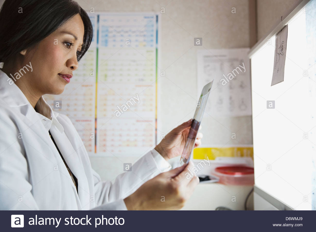 mature female doctor analyzing x-ray in clinic stock photo: 55884033
