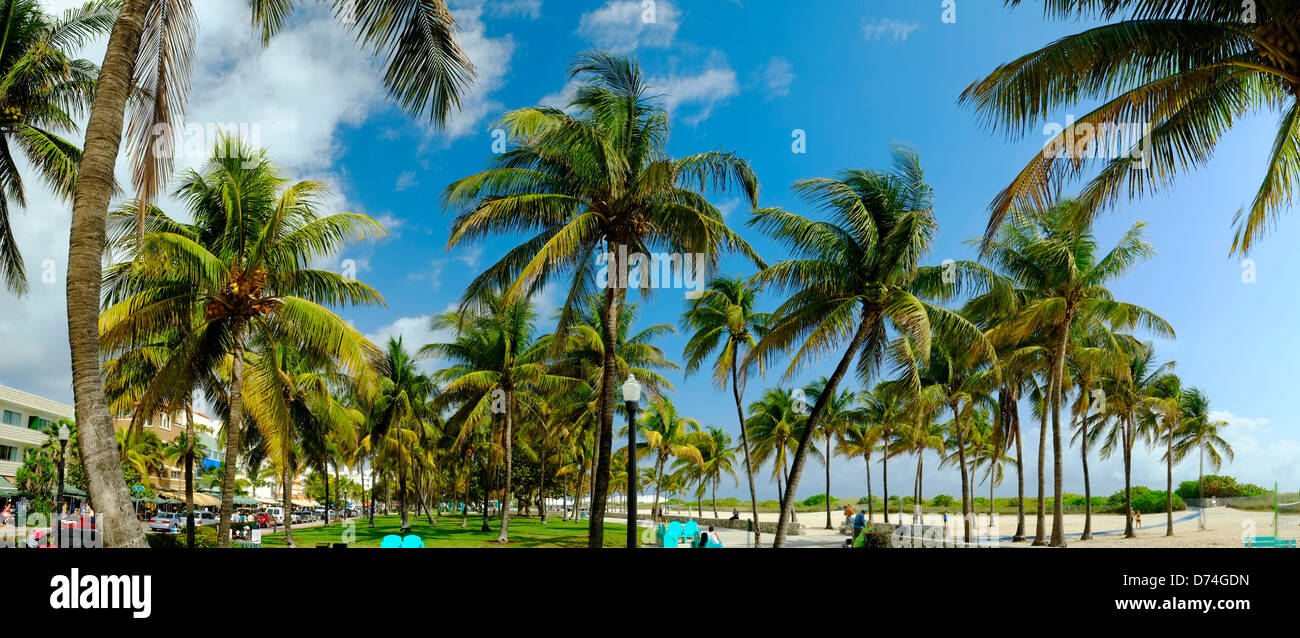 Palm Trees, South Beach, Miami, Florida, USA - Stock Image