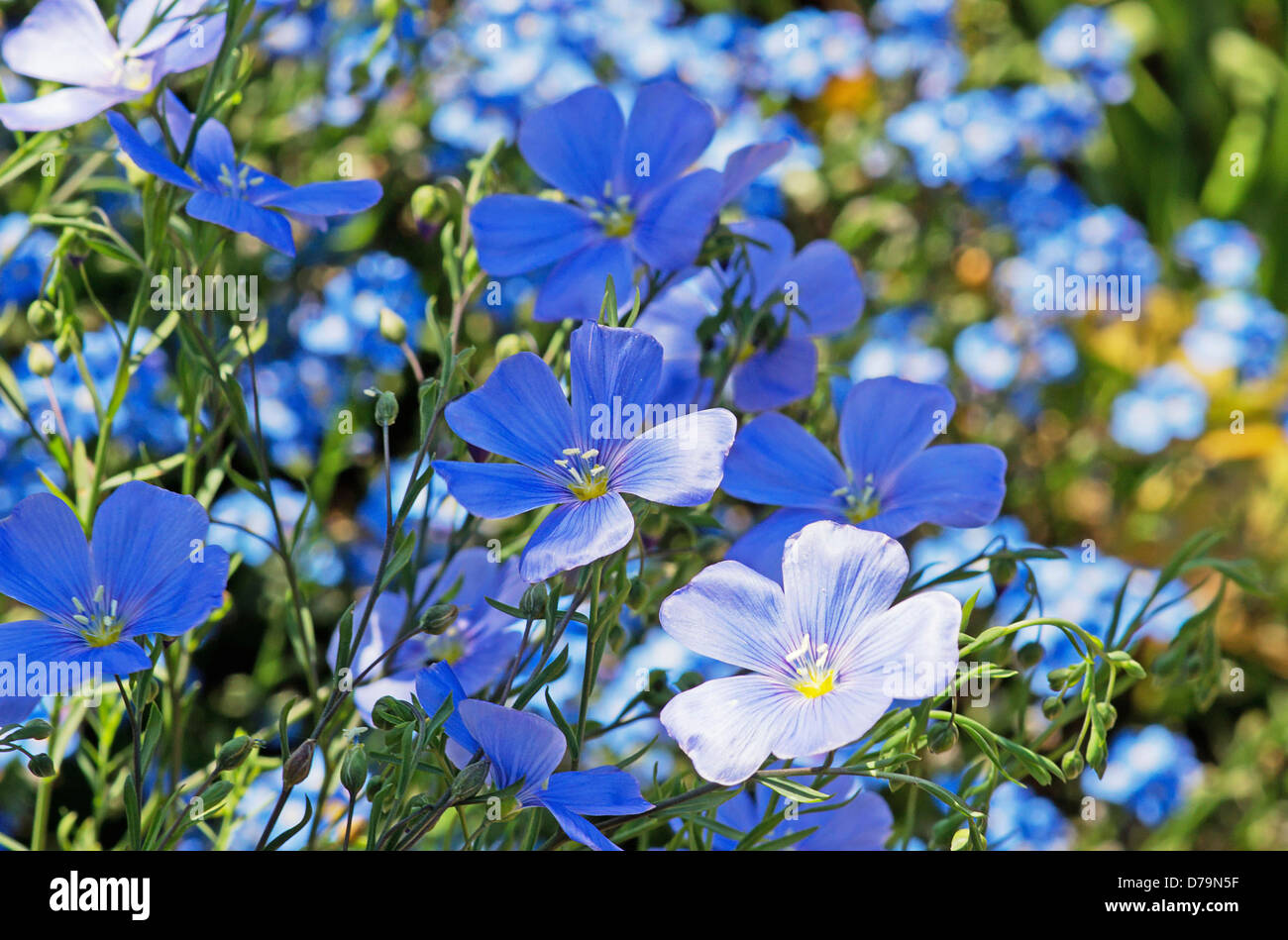 Small blue perennial flowers choice image flower decoration ideas blue flowered perennials mikes garden top 5 plants mightylinksfo